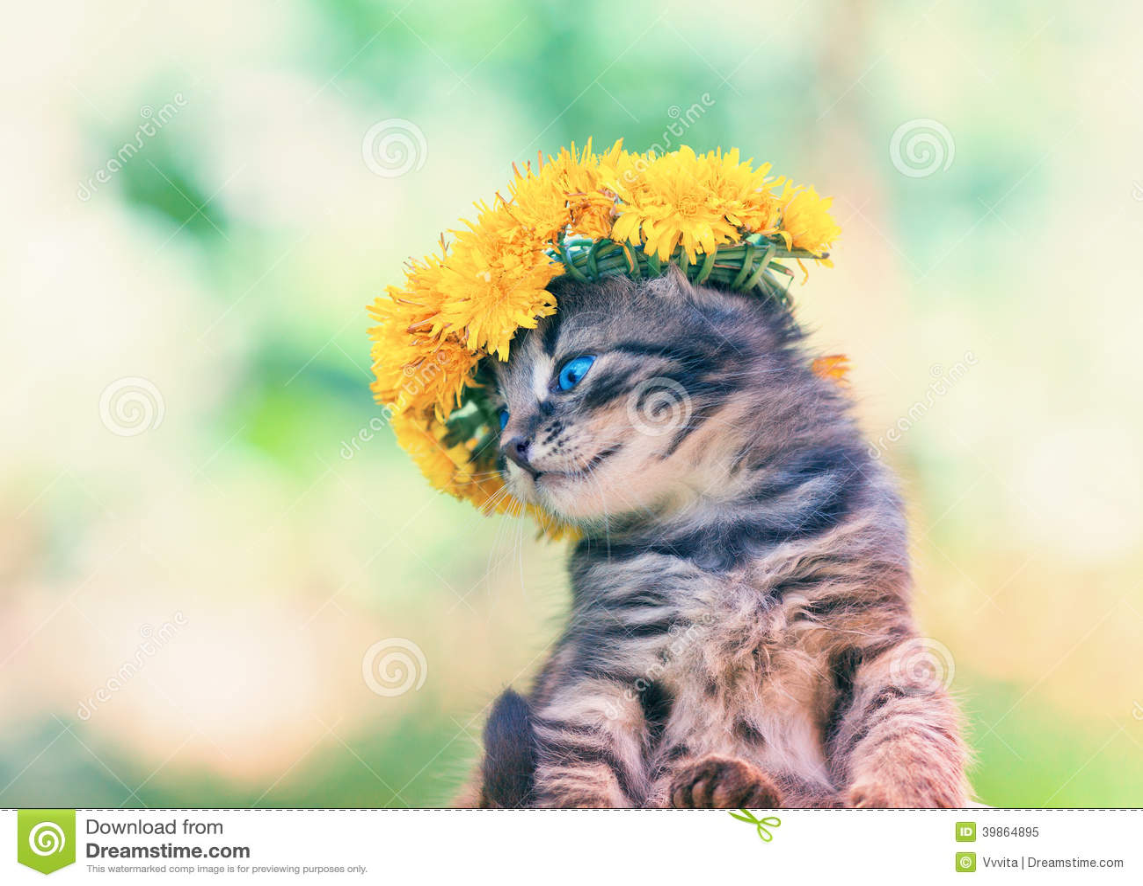 Gatinho coroado com um chaplet do dente-de-leão