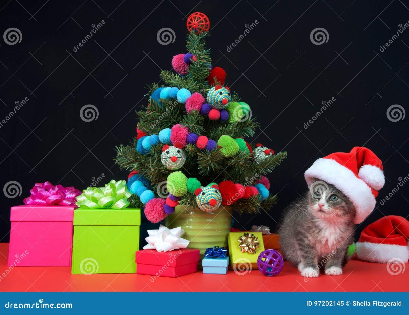Gatinho do gato malhado do Natal que veste o chapéu de Santa pela árvore diminuta