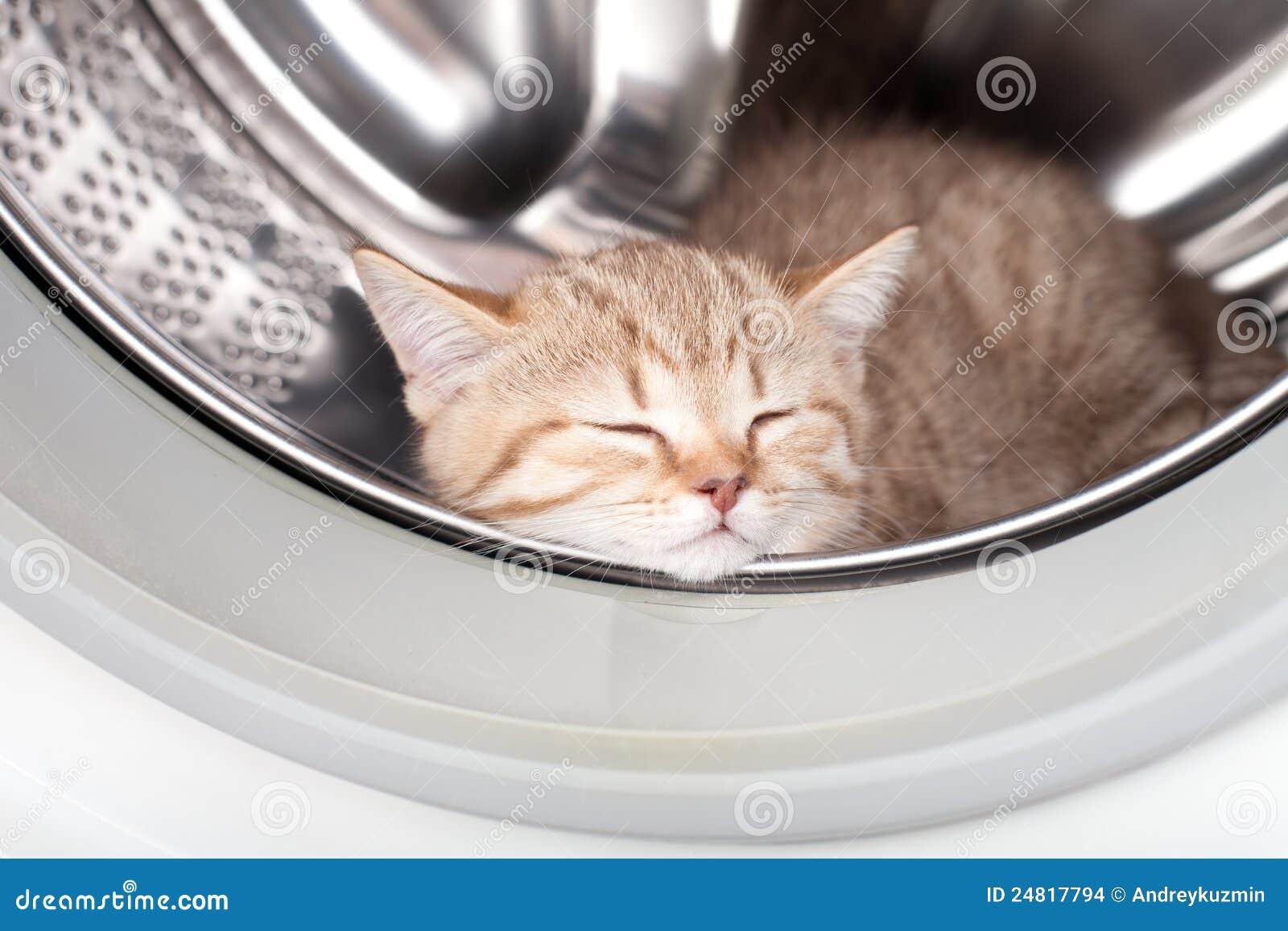 Gatinho do sono dentro da arruela da lavanderia