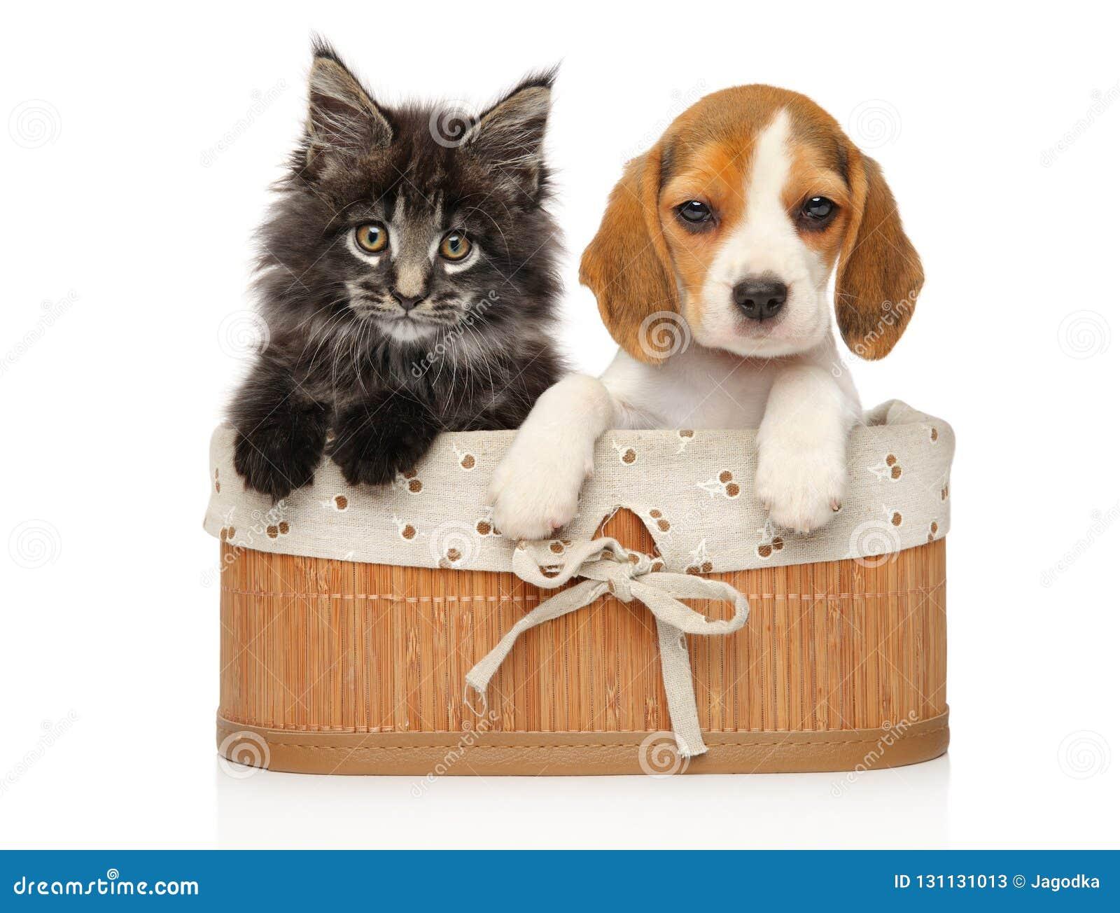 Gatinho e cachorrinho junto em um fundo branco