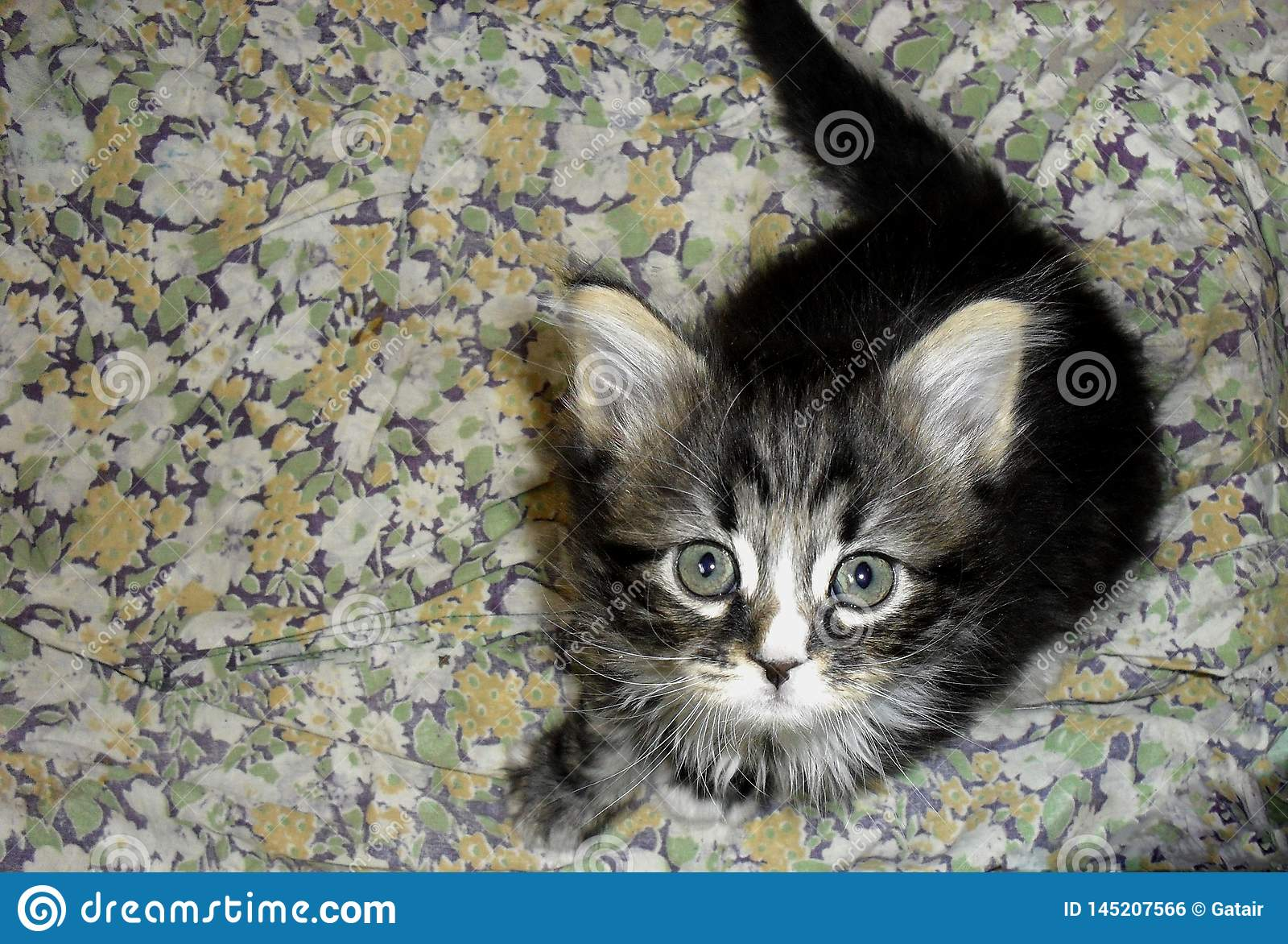 Gatinho macio cinzento listrado pequeno bonito adorável