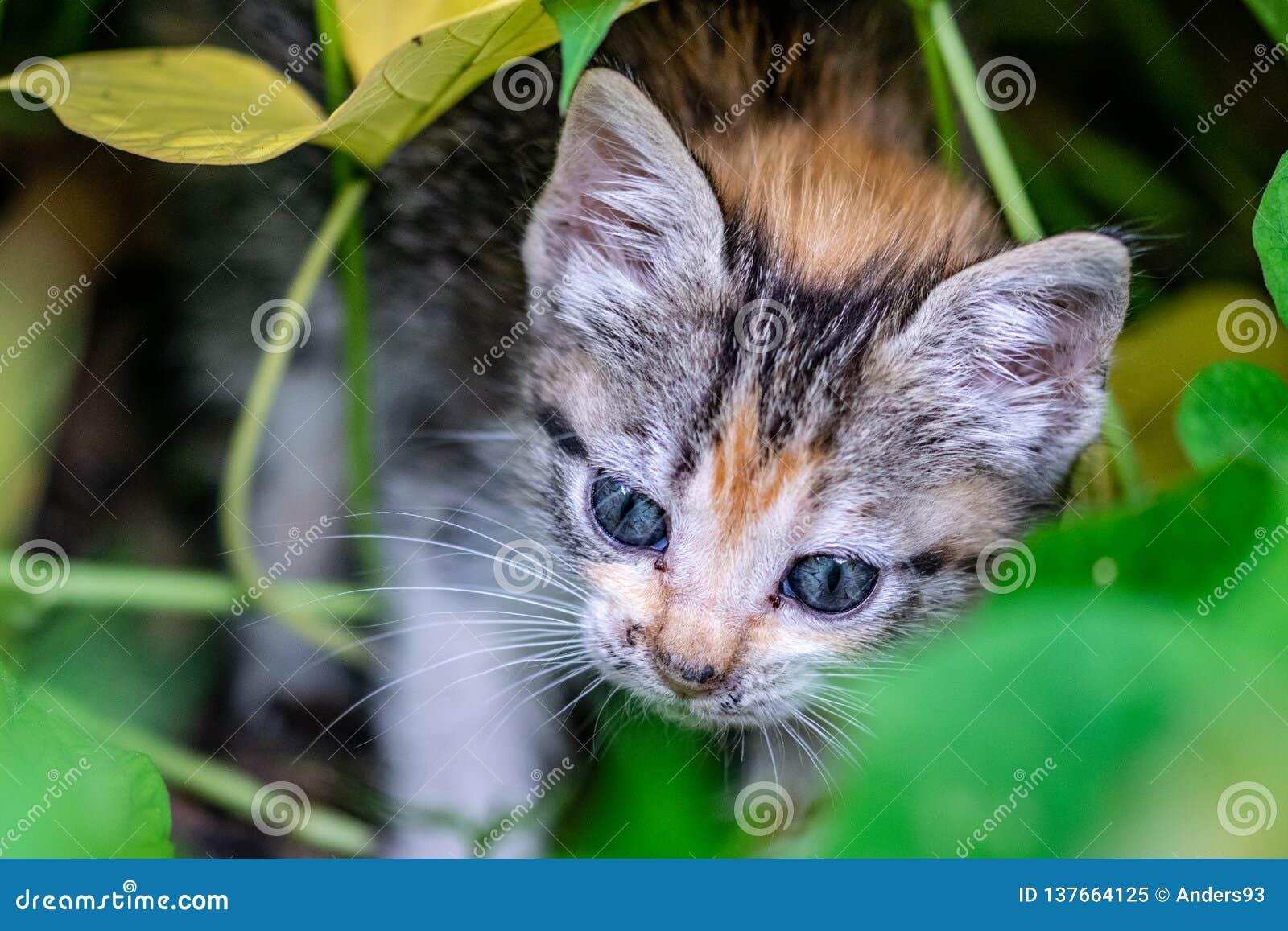 Gatinho novo que esconde em arbustos do jardim