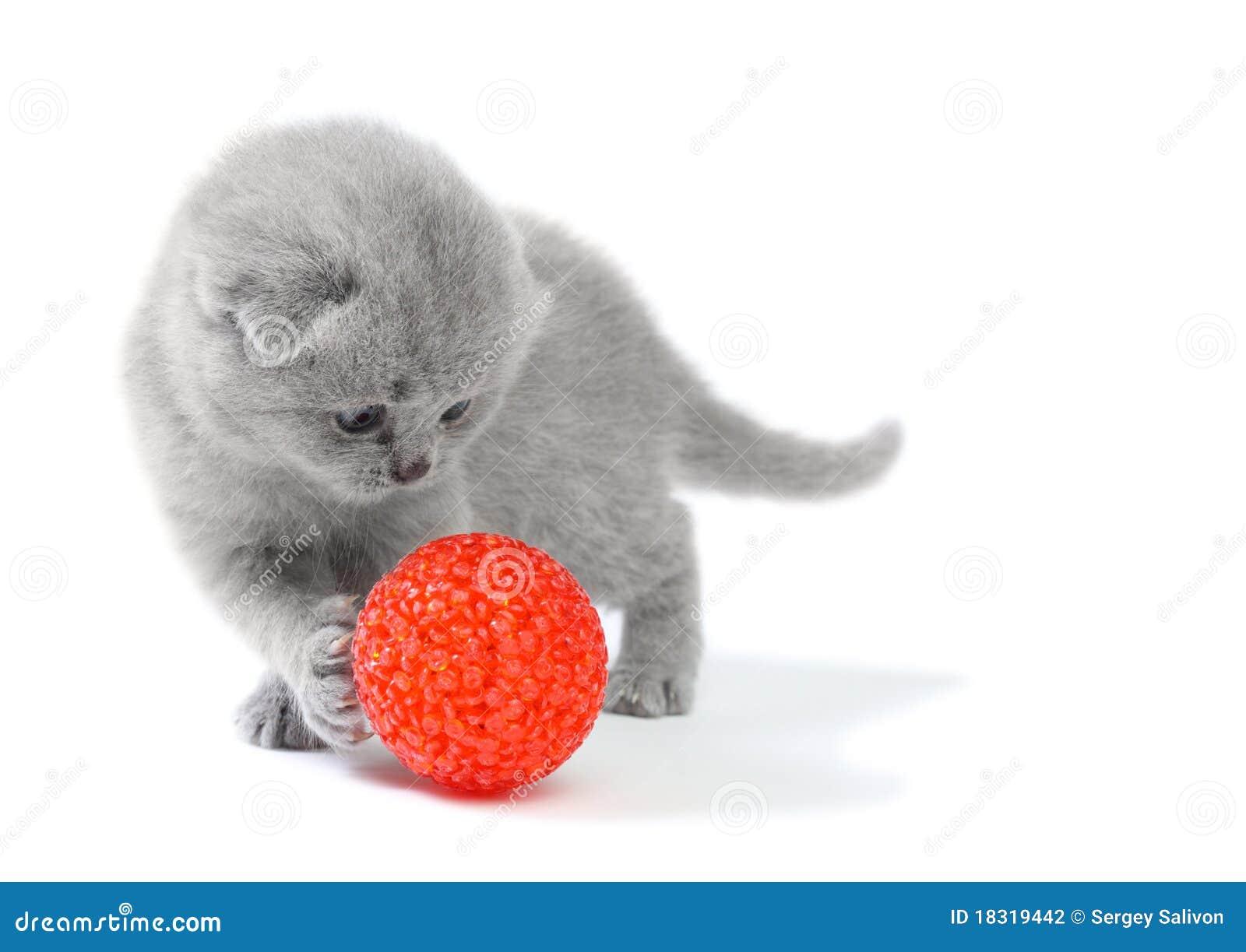 Gatinho pequeno que joga com esfera