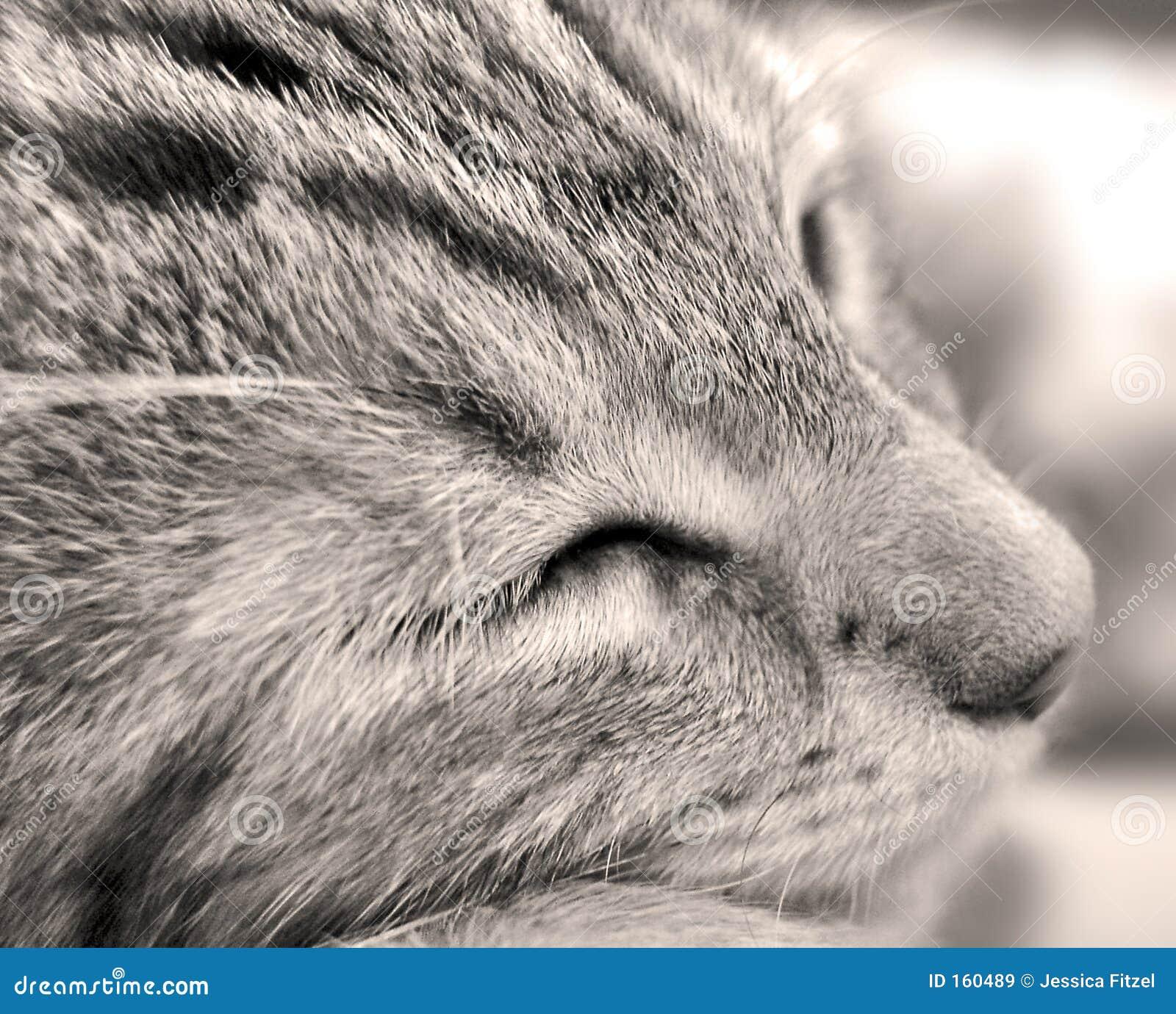 Gatinho sonolento