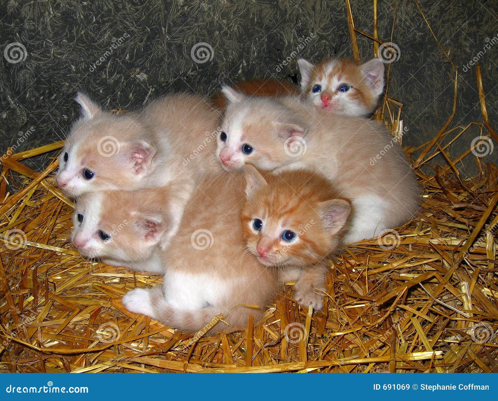 Imagens de Stock Royalty Free: Gatinhos amarelos