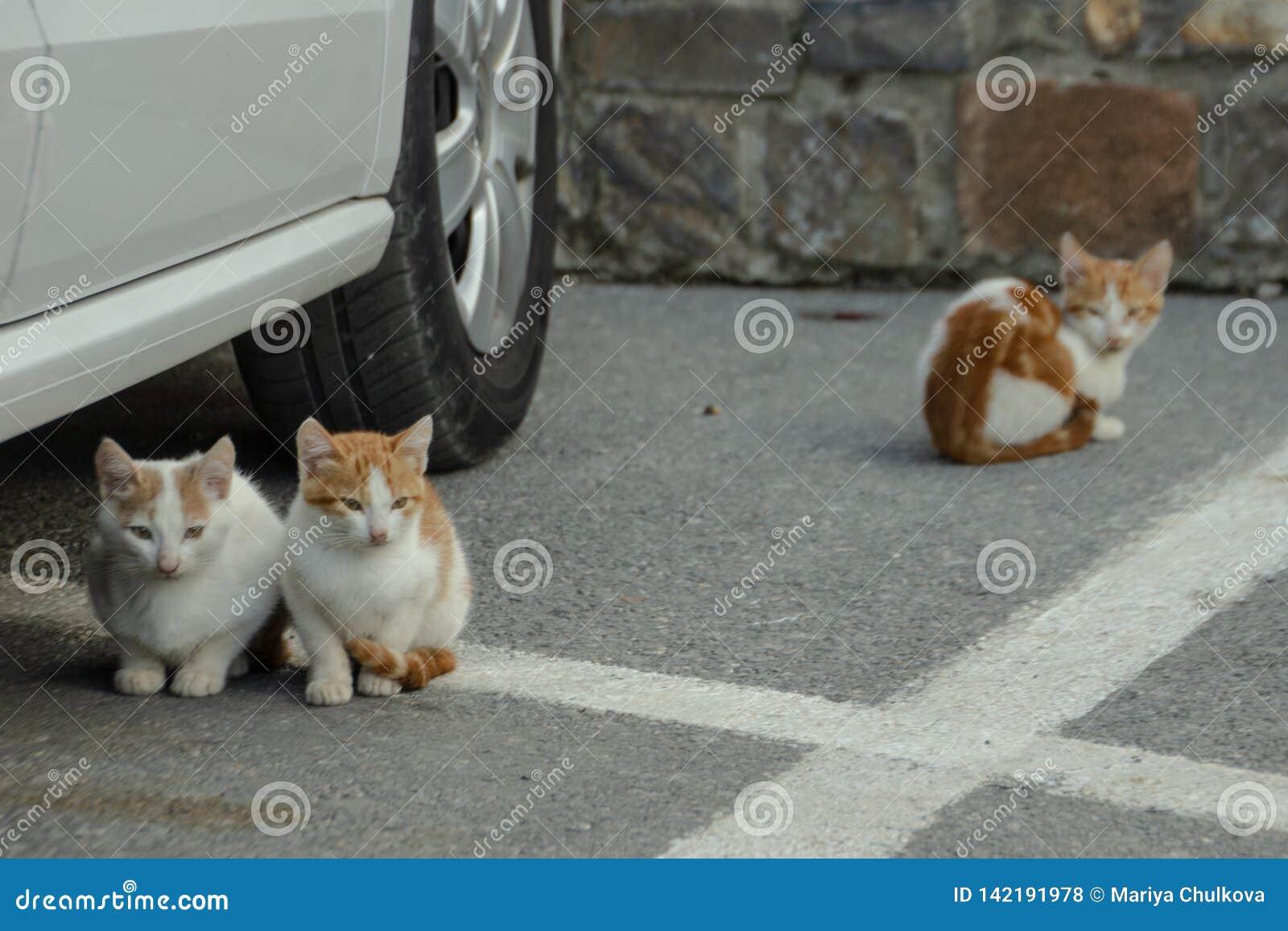 Gatinhos desabrigados no log de estacionamento