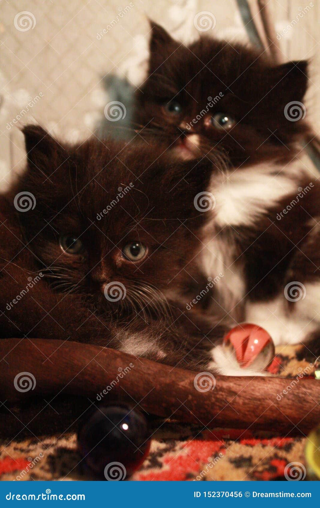 Gatinhos e bolas de vidro