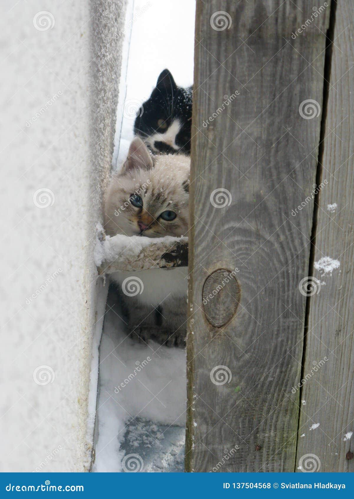 Gatinhos macios desabrigados pequenos, branco e preto
