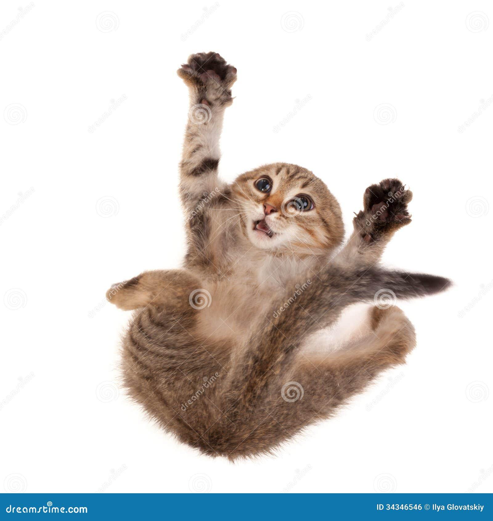 Gatito asustado Imagen de archivo libre de regalías