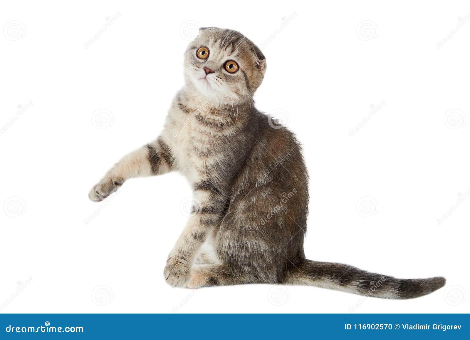 Bonito Gatos Creativos Para Colorear Regalo - Ideas Creativas para ...