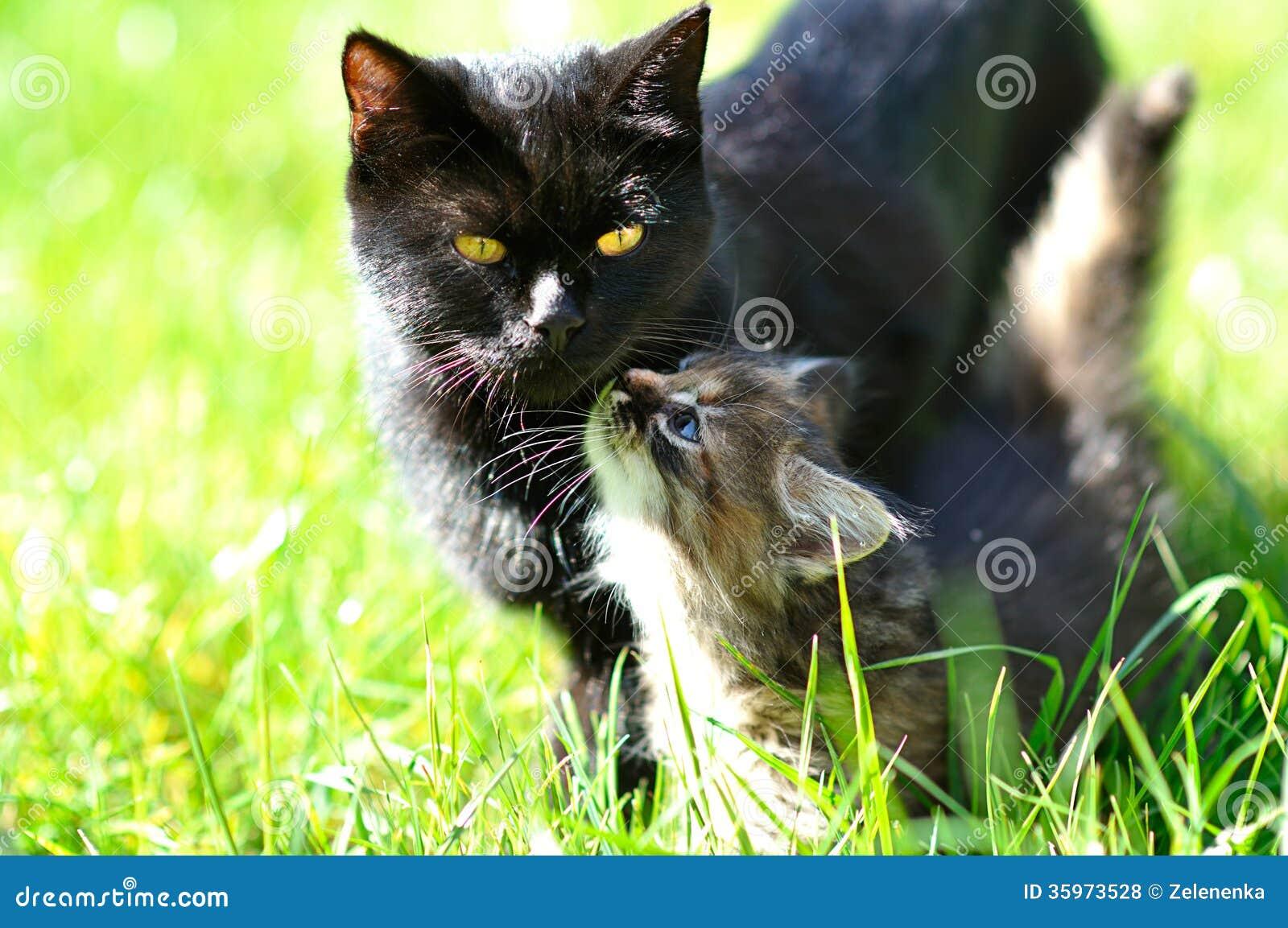 Gatito con su mamá