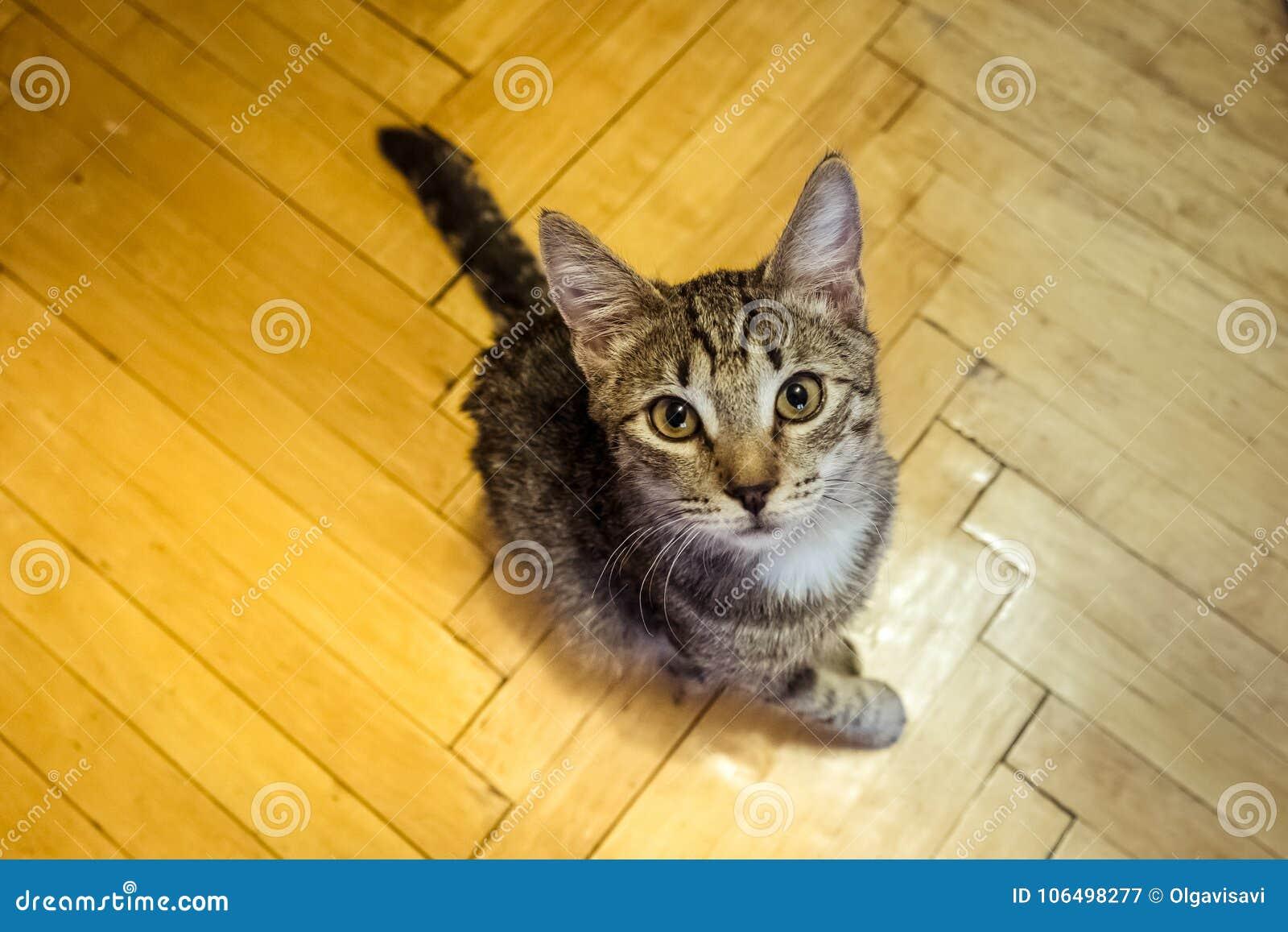 Gatito con una pata enferma