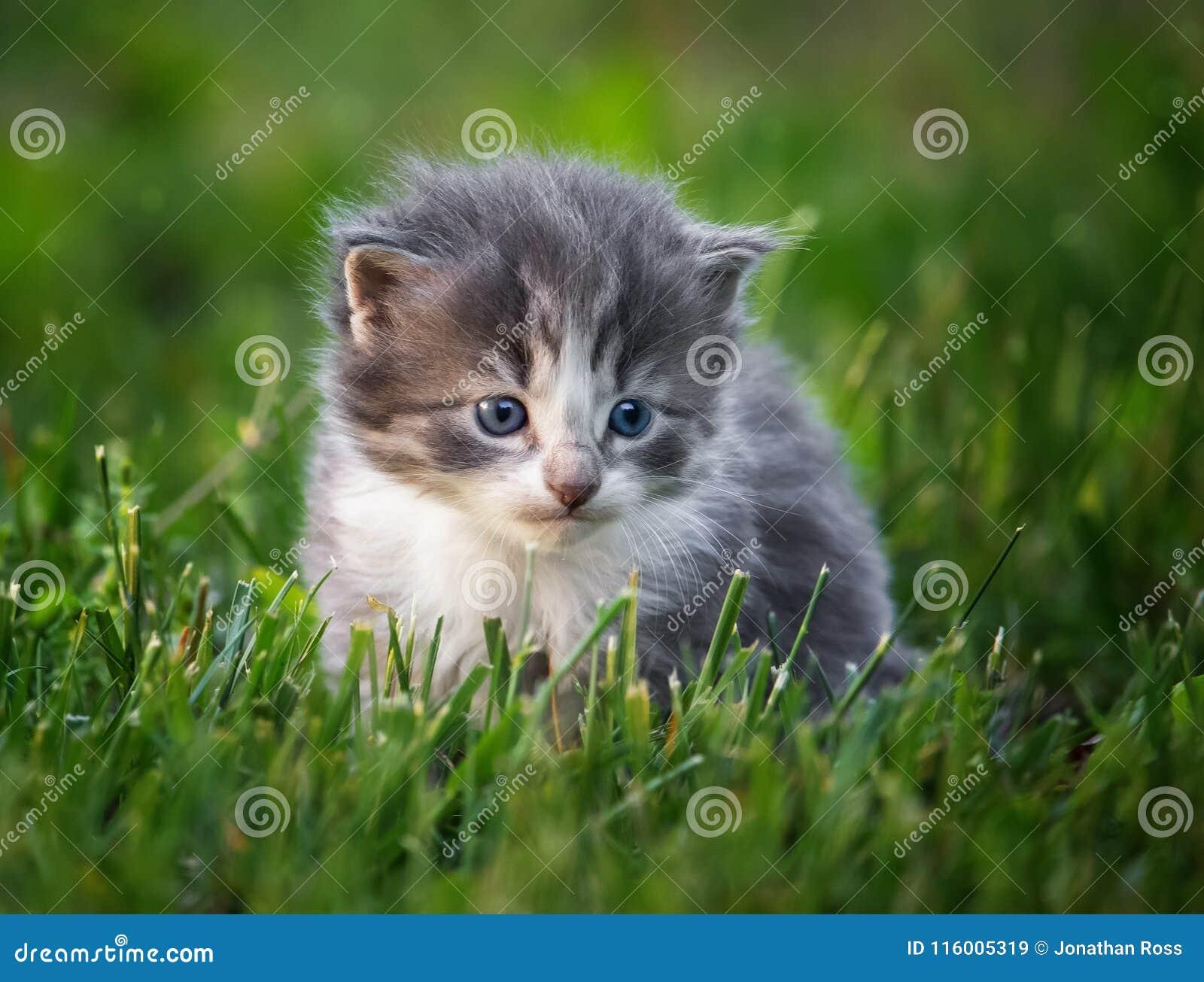 Gatito del bebé en hierba