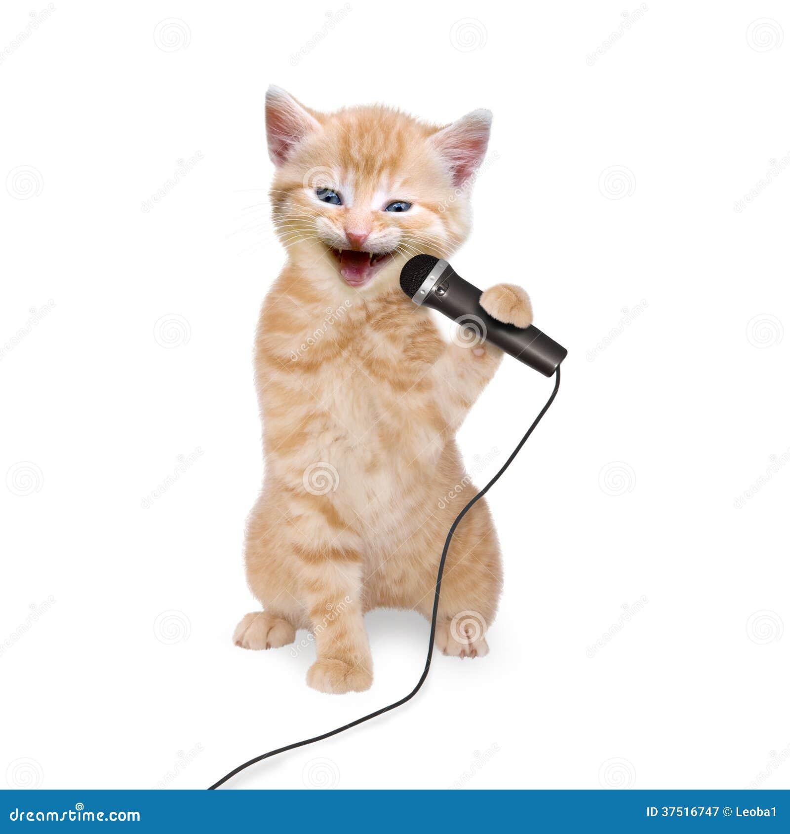 http://thumbs.dreamstime.com/z/gatito-del-gato-que-canta-en-el-micr%C3%B3fono-37516747.jpg