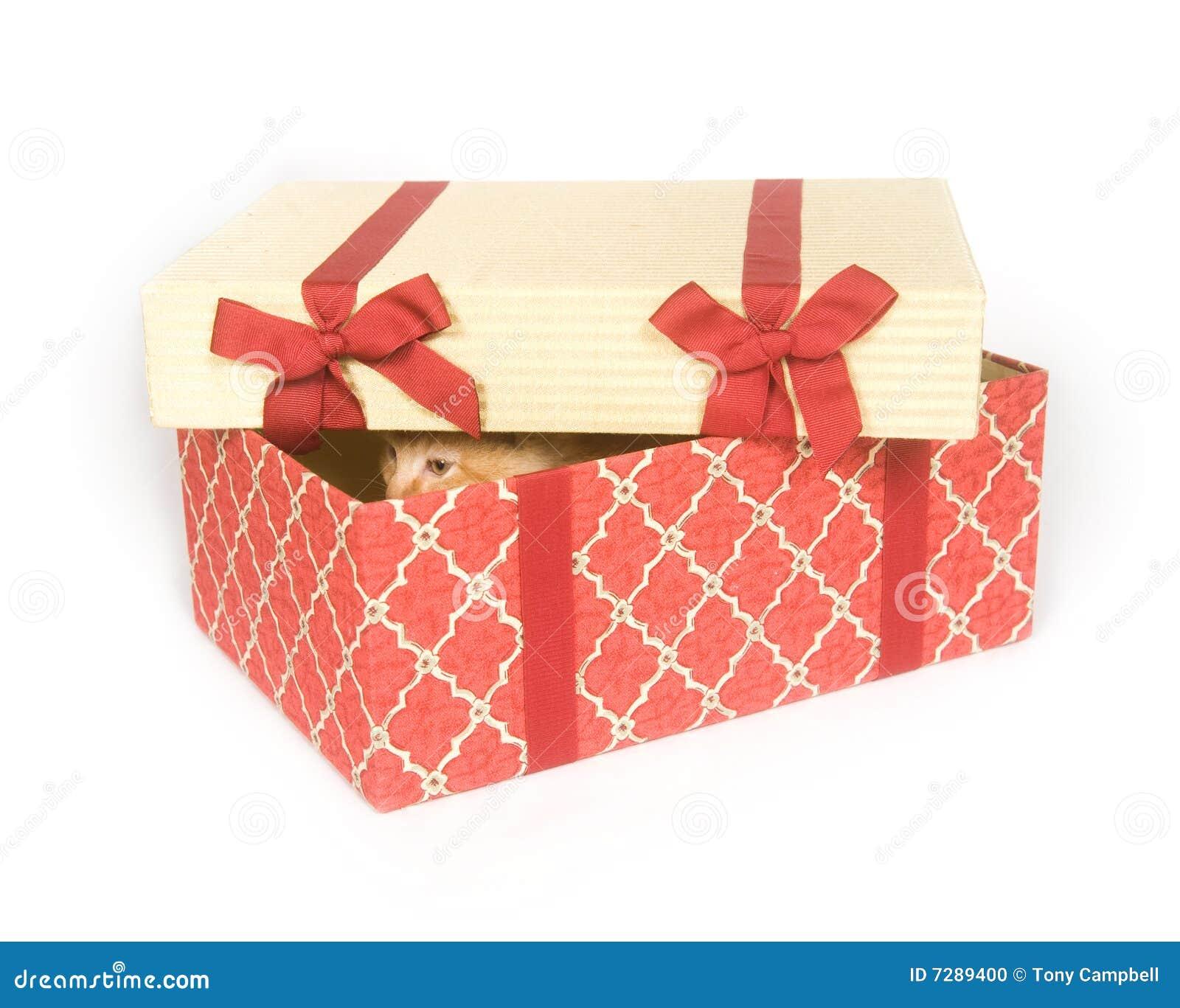 Gatito en un rectángulo de regalo
