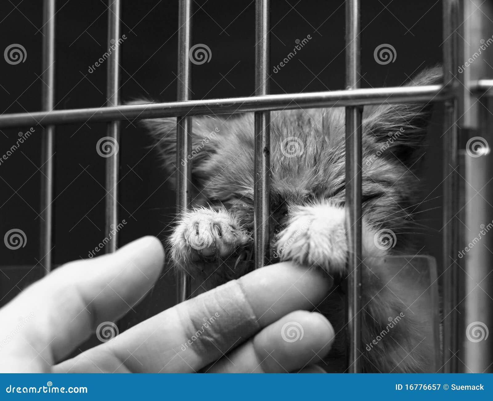 Gatito enfermo en una jaula