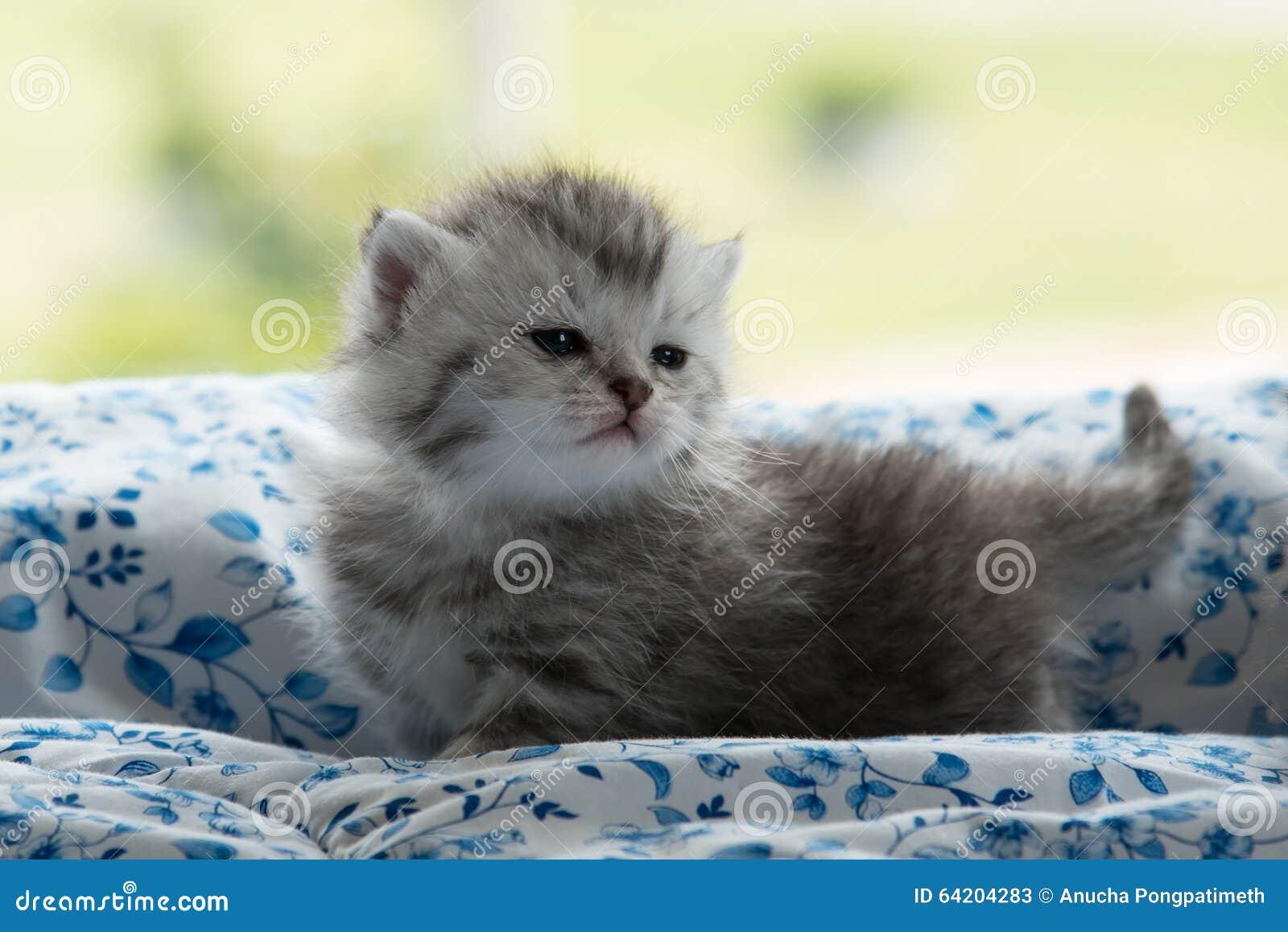 Gatito lindo