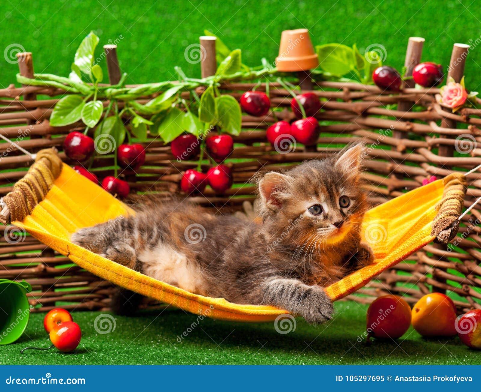 Gatito mullido lindo