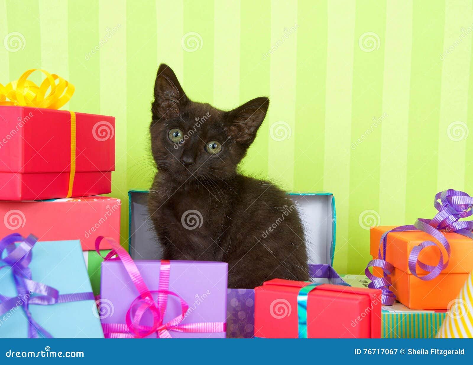 Gatito Negro Del Gato Atigrado En Presentes De Cumpleanos Imagen De