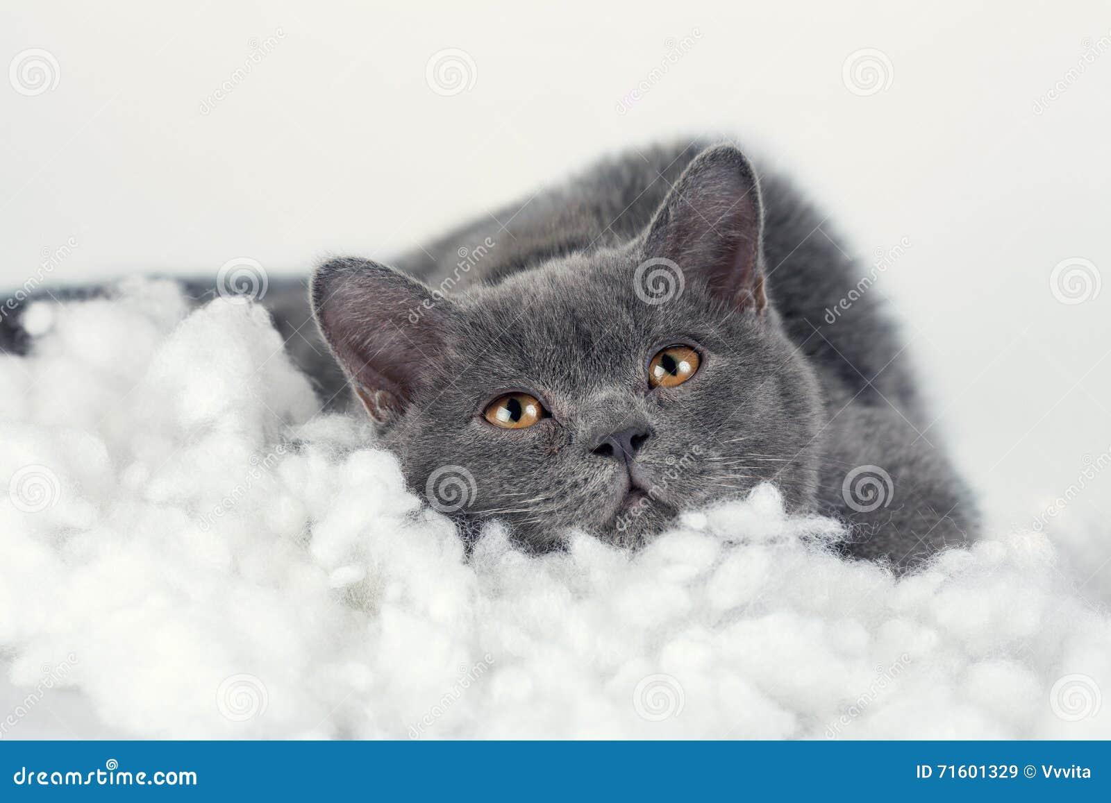 Gatito que sueña en la manta blanca