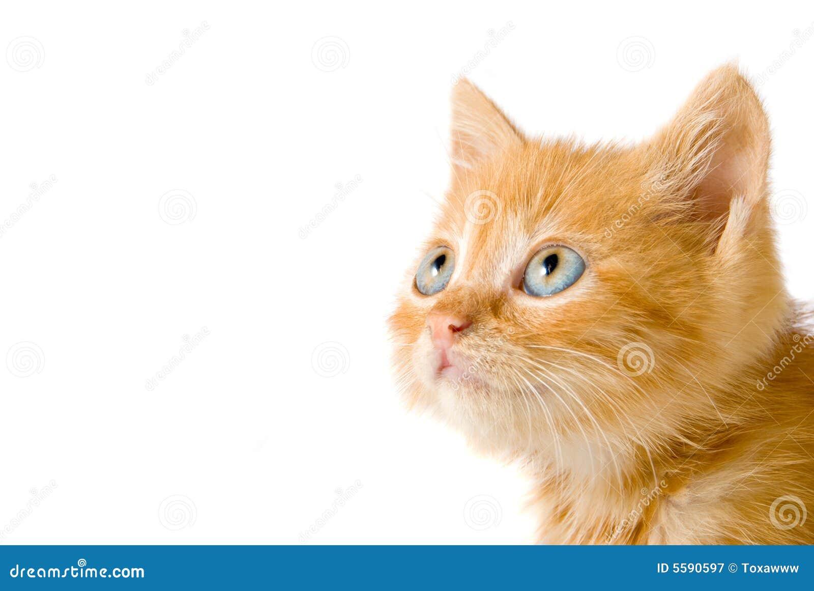 Gatito rojo