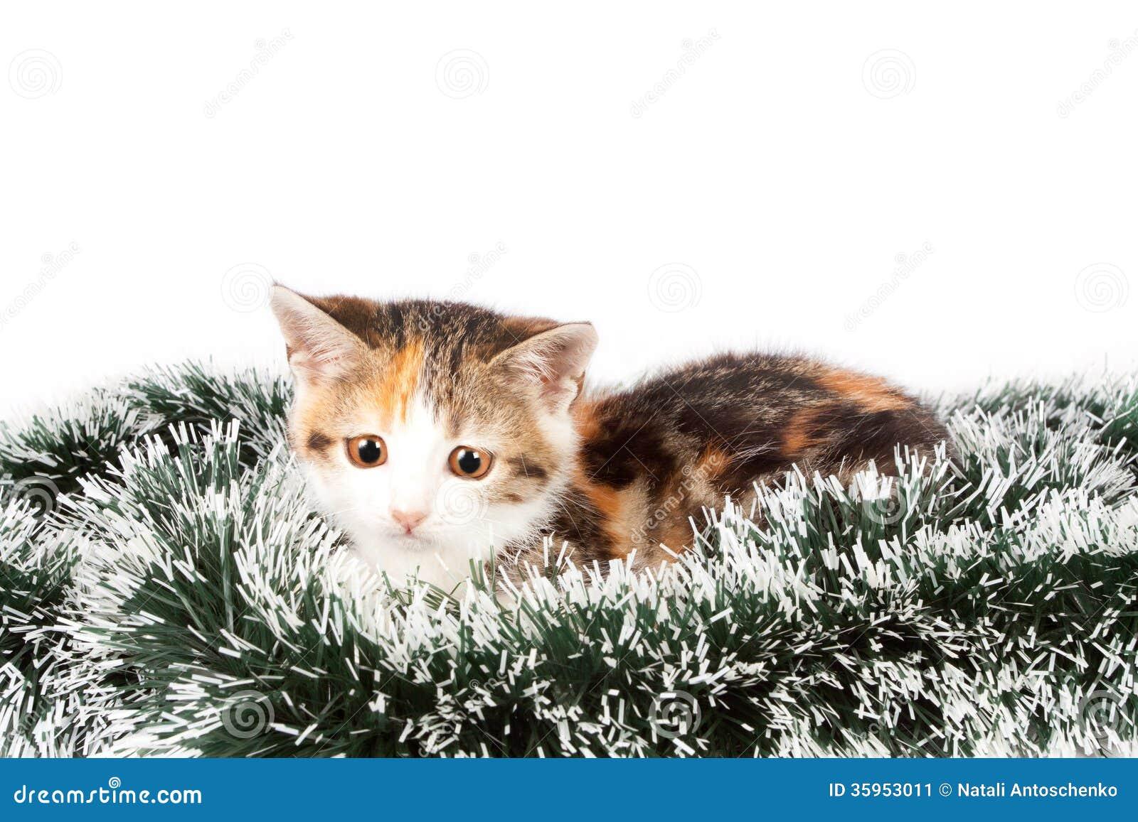 Gatito y malla manchados la Navidad