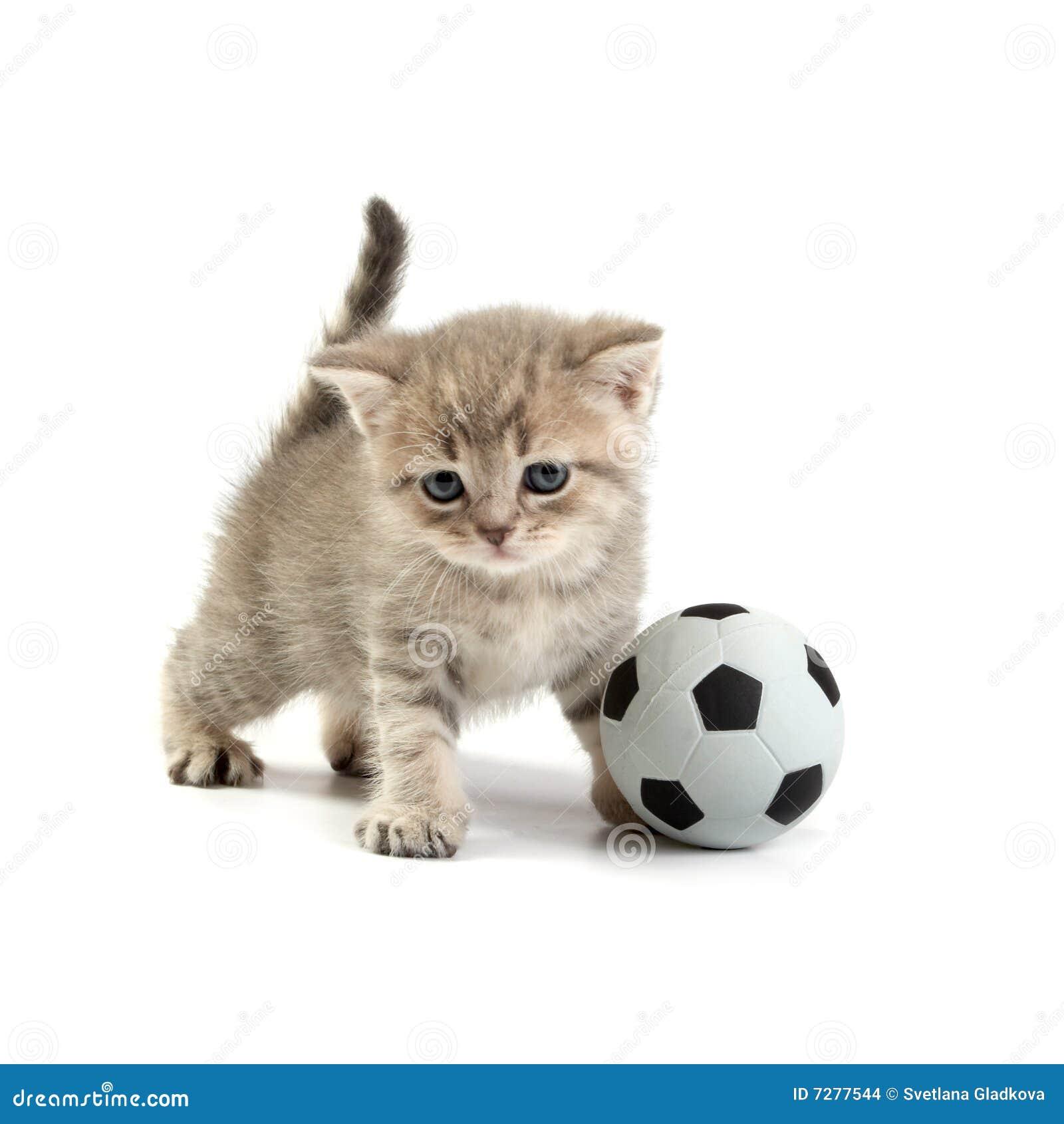 Gatito y un balompié
