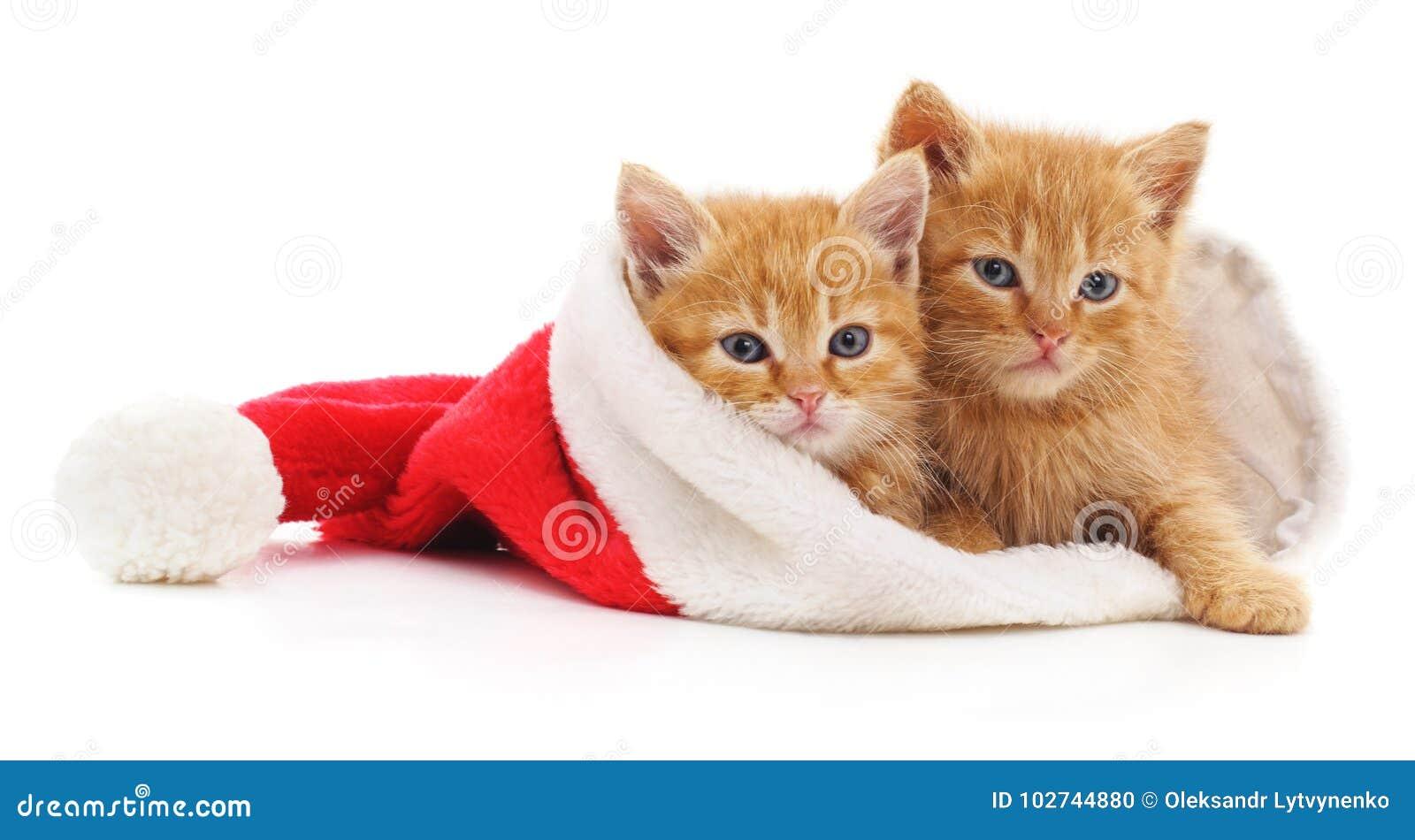 Gatitos en sombrero de la Navidad