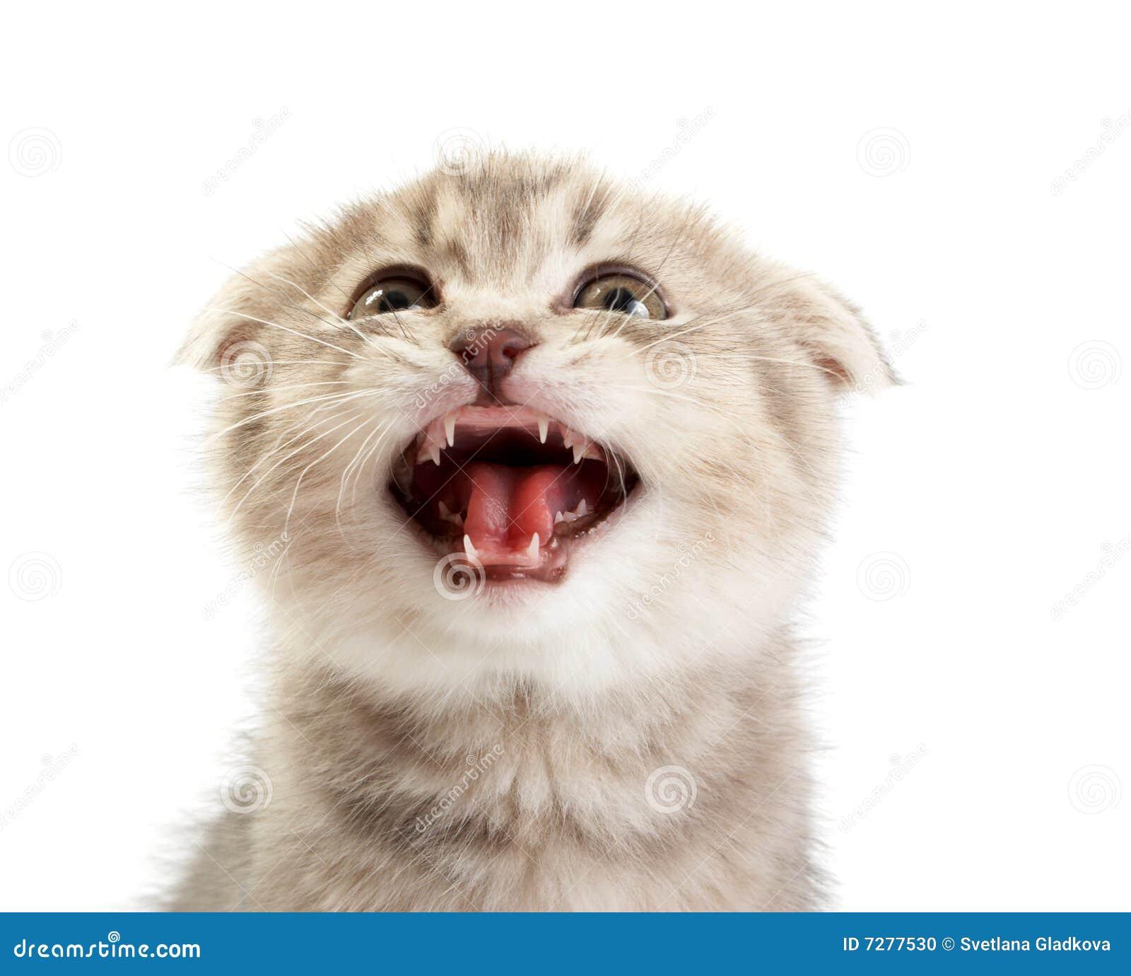 Gatitos en un fondo blanco