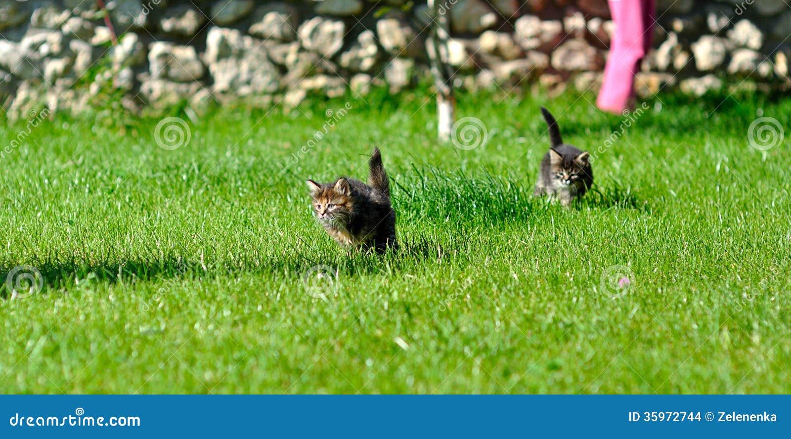 Gatitos que juegan en la hierba