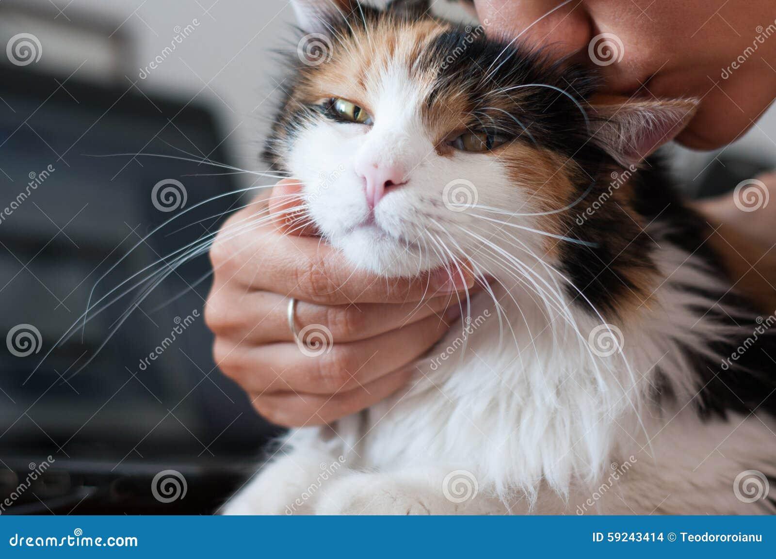 Download Gato adorado foto de archivo. Imagen de adorado, beso - 59243414