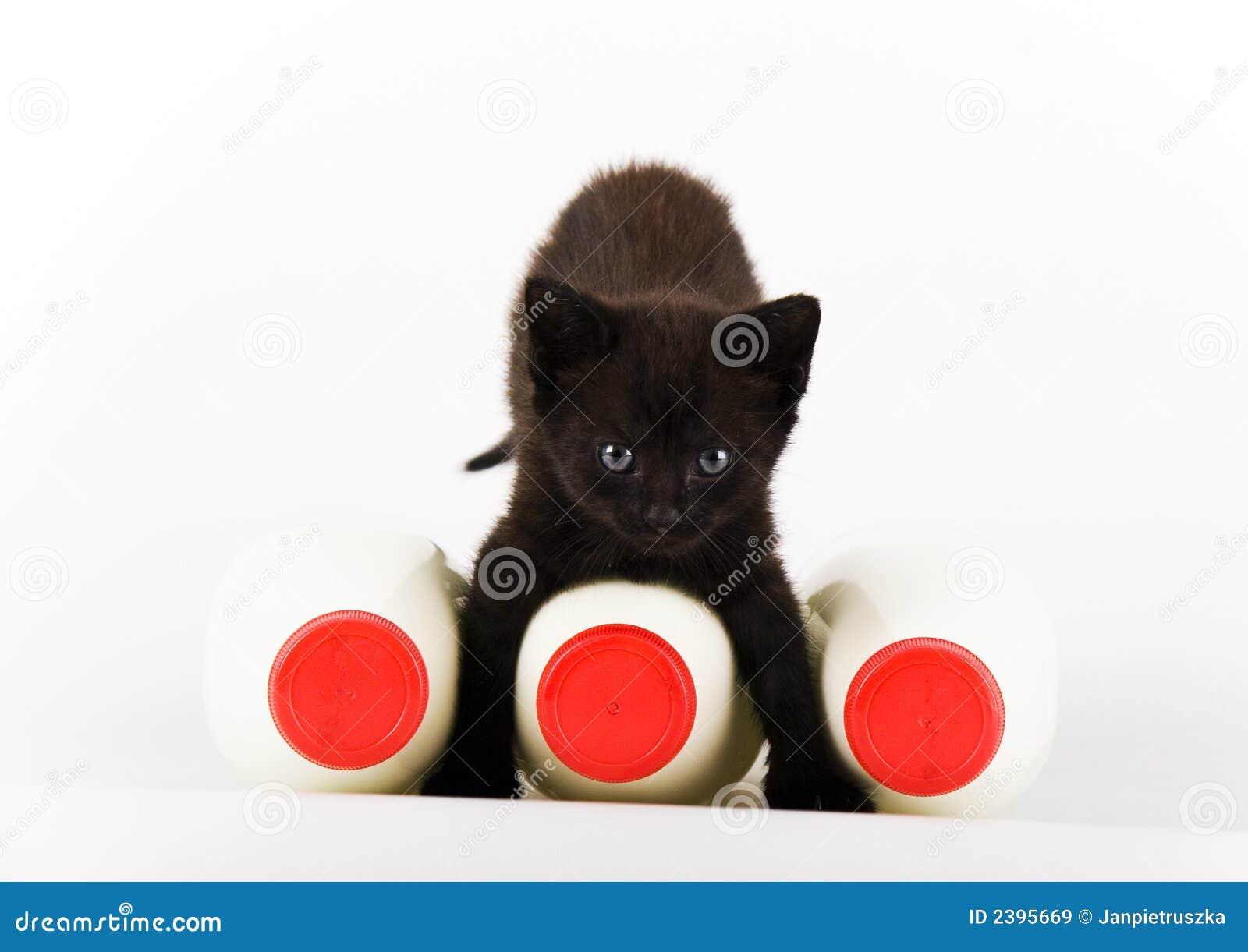 Gato & leite