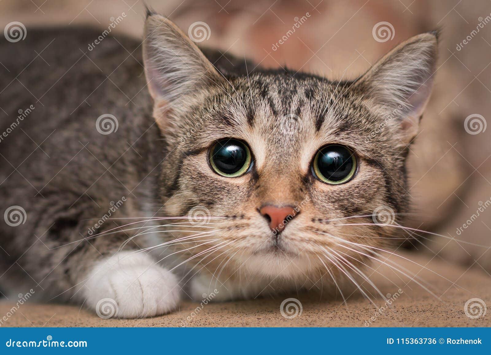 Gato asustado con los ojos morados grandes
