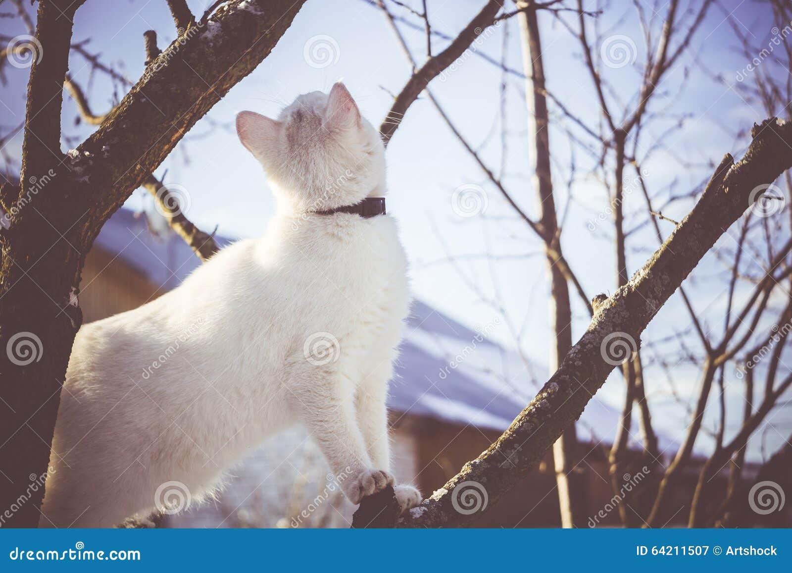 Gato blanco en el árbol del invierno filtrado