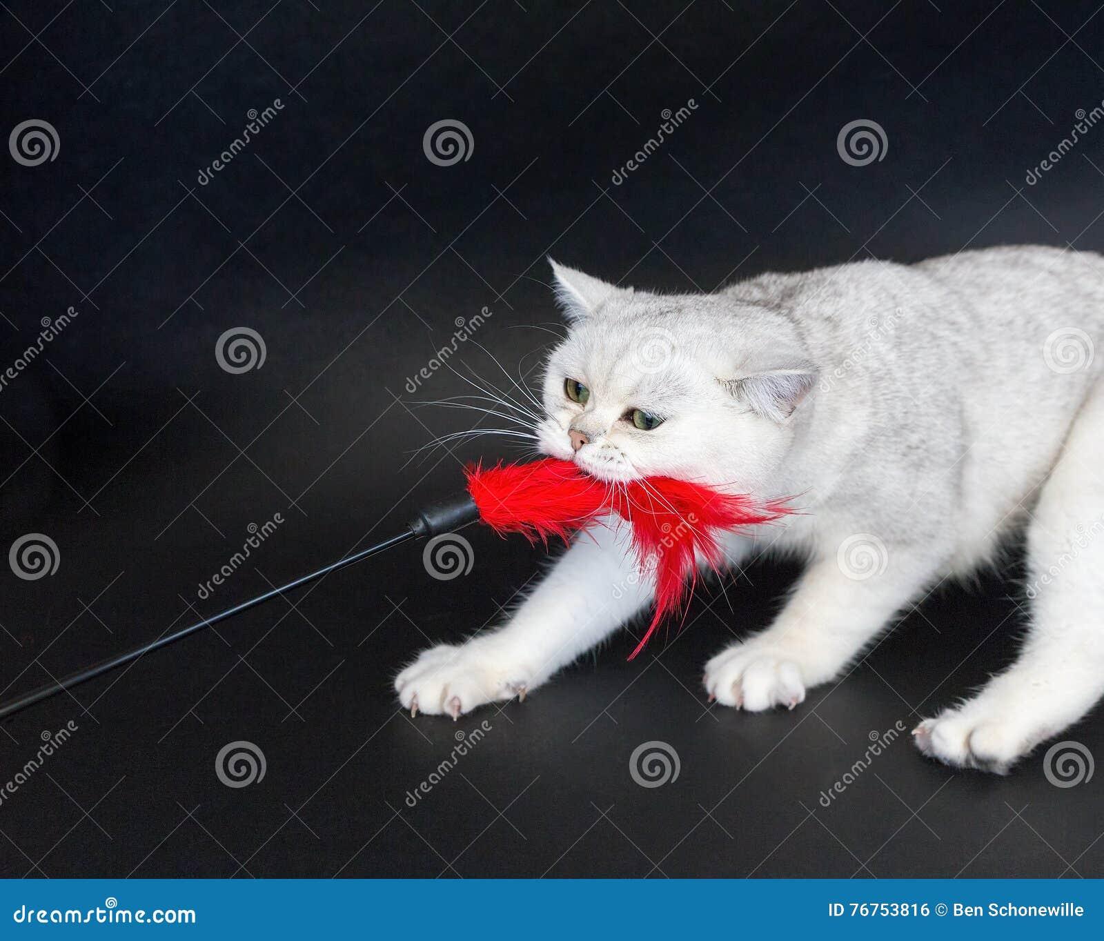 De Blanco Juguete Juega Archivo Foto Rojo Del Tirando Que Gato Xsrdtchq bIvygYmf76