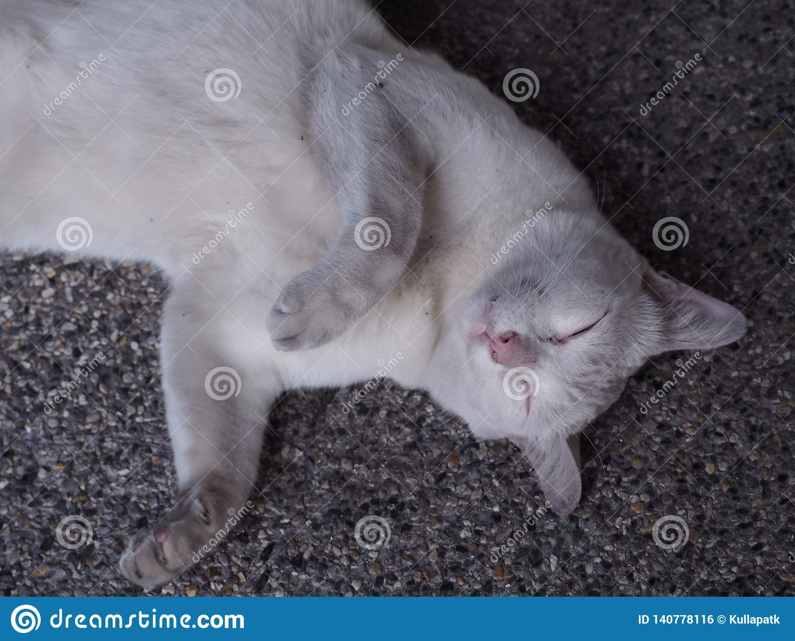 Gato blanco soñoliento