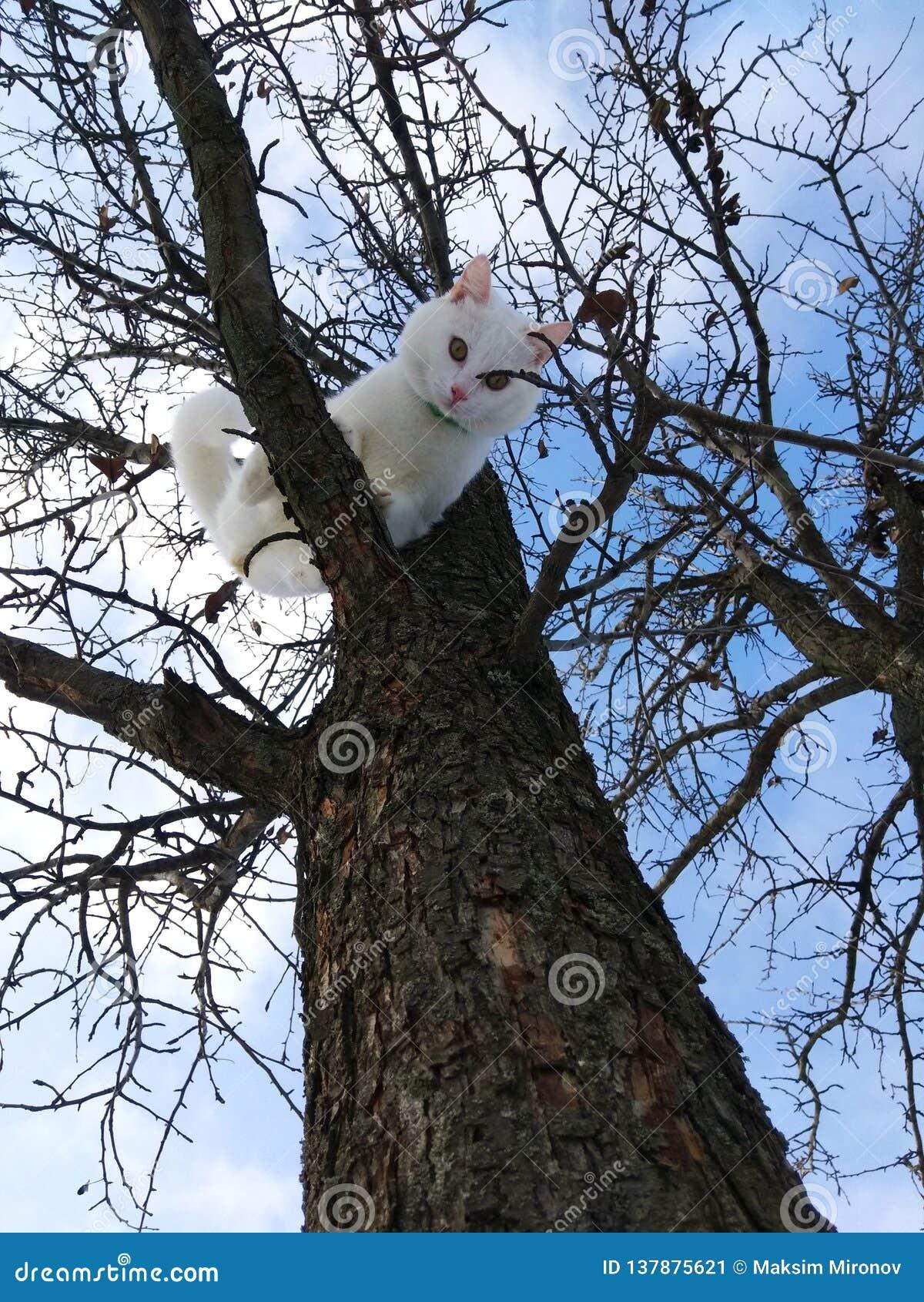 Gato bonito branco em um ramo de árvore