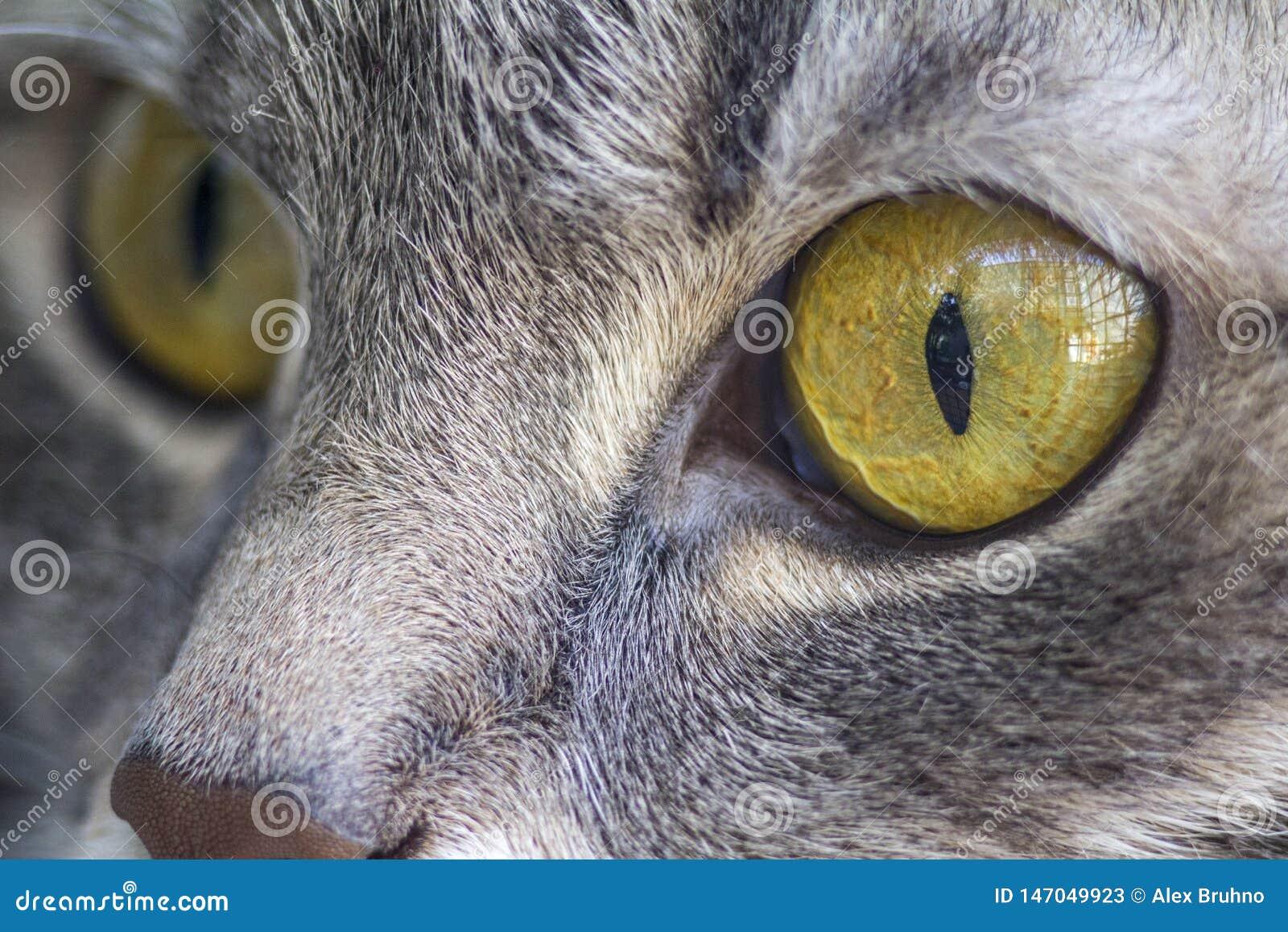 Gato bonito com olhos grandes, pele cinzenta meu tigre bonito pequeno