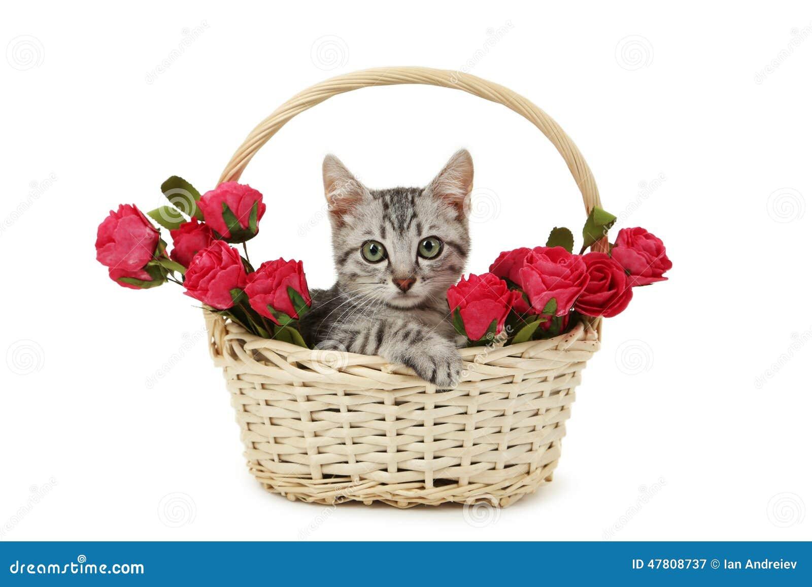 Gato bonito na cesta com as flores isoladas no fundo branco