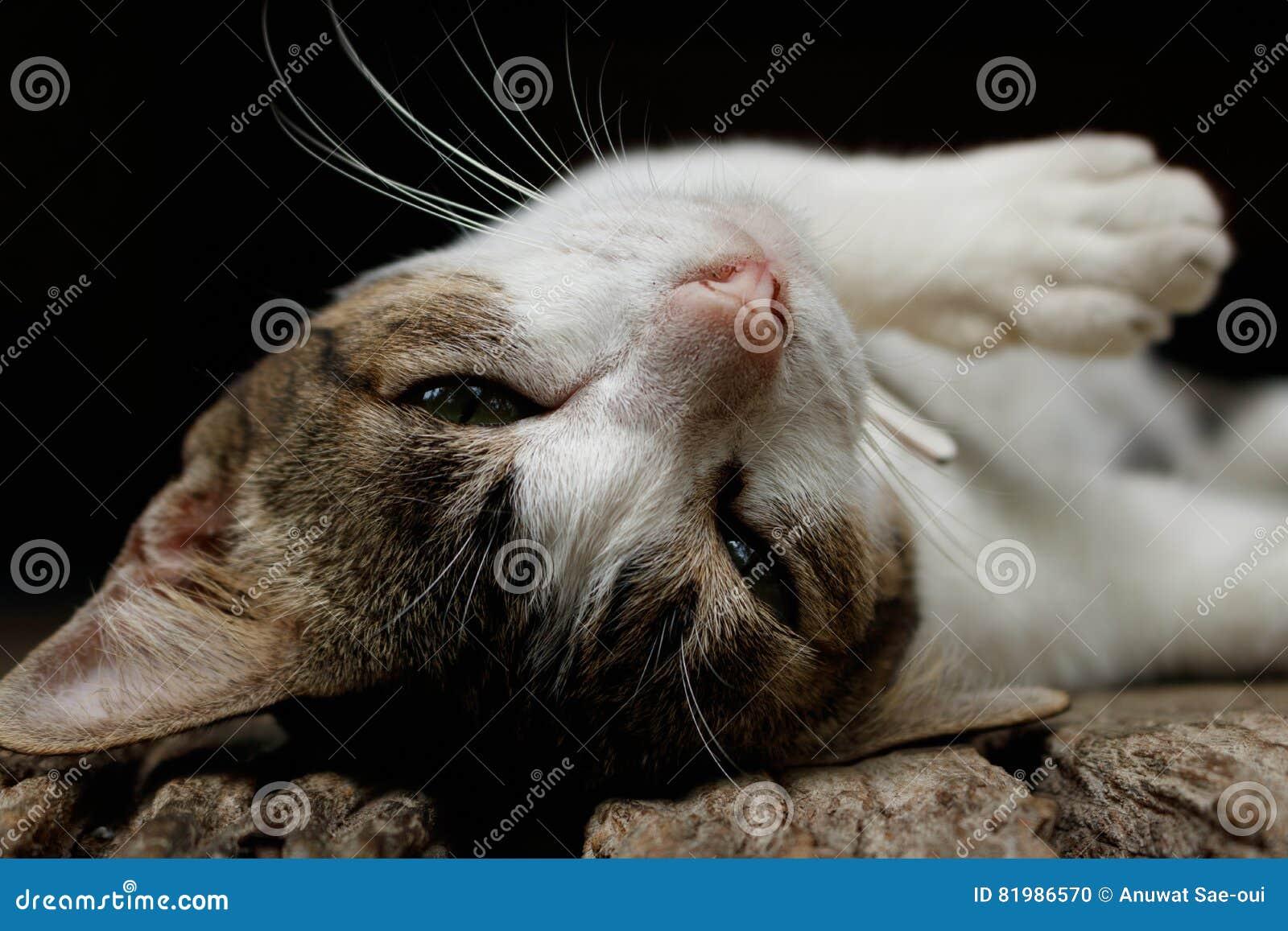 Gato bonito no assoalho de madeira