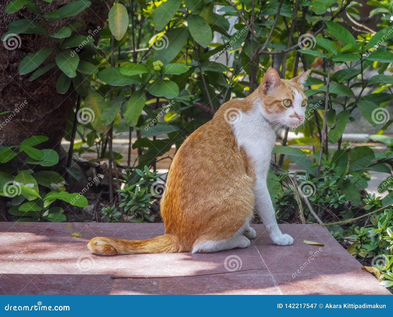 Gato bonito que senta-se no assoalho de telha com fundo das folhas