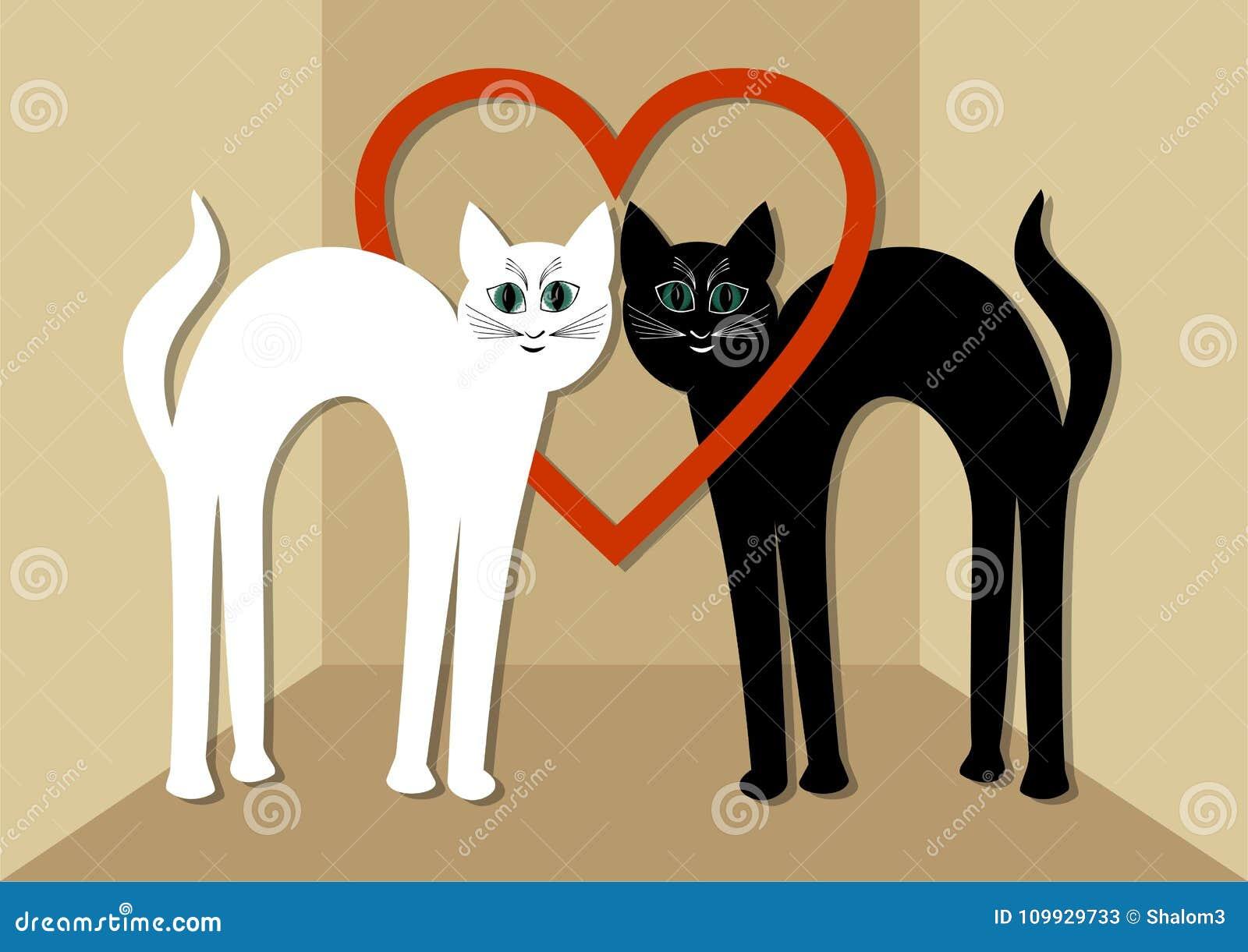 Gato Branco E Gato Preto No Amor Dois Gatos Bonitos Com