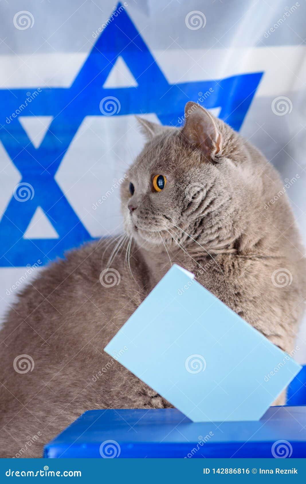 Gato, caja del voto y votación lindos en una urna el día de elección sobre fondo de la bandera de Israel