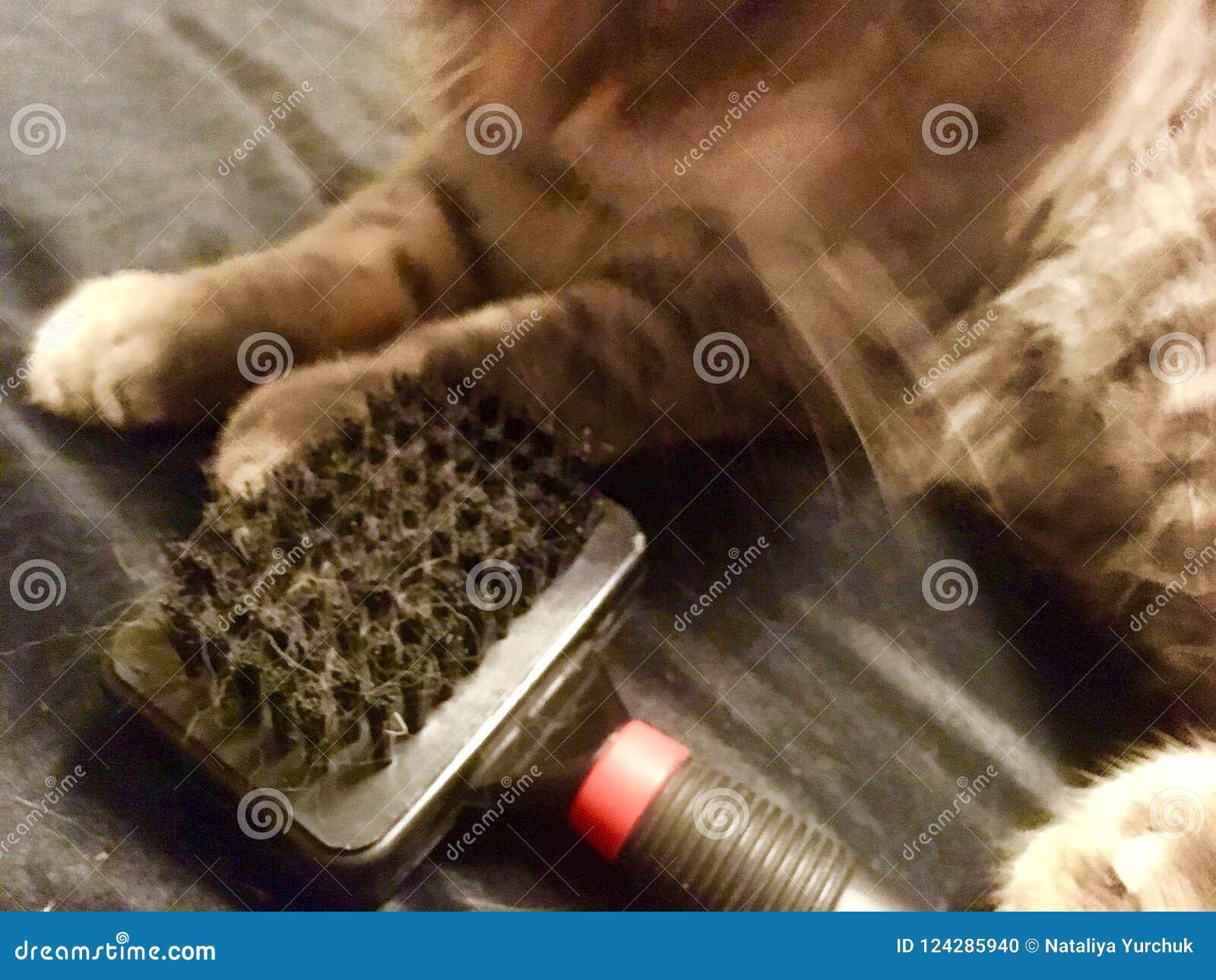 Gato com a escova escovar
