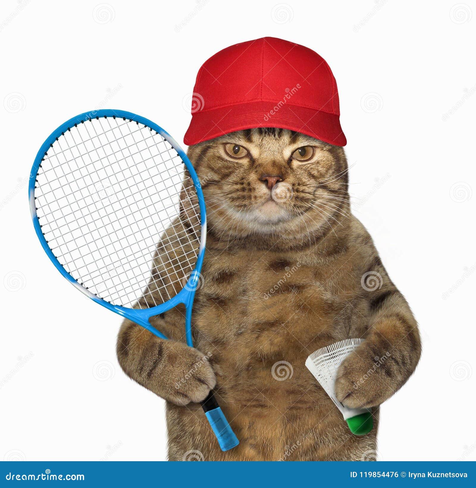 Gato com raquete de badminton