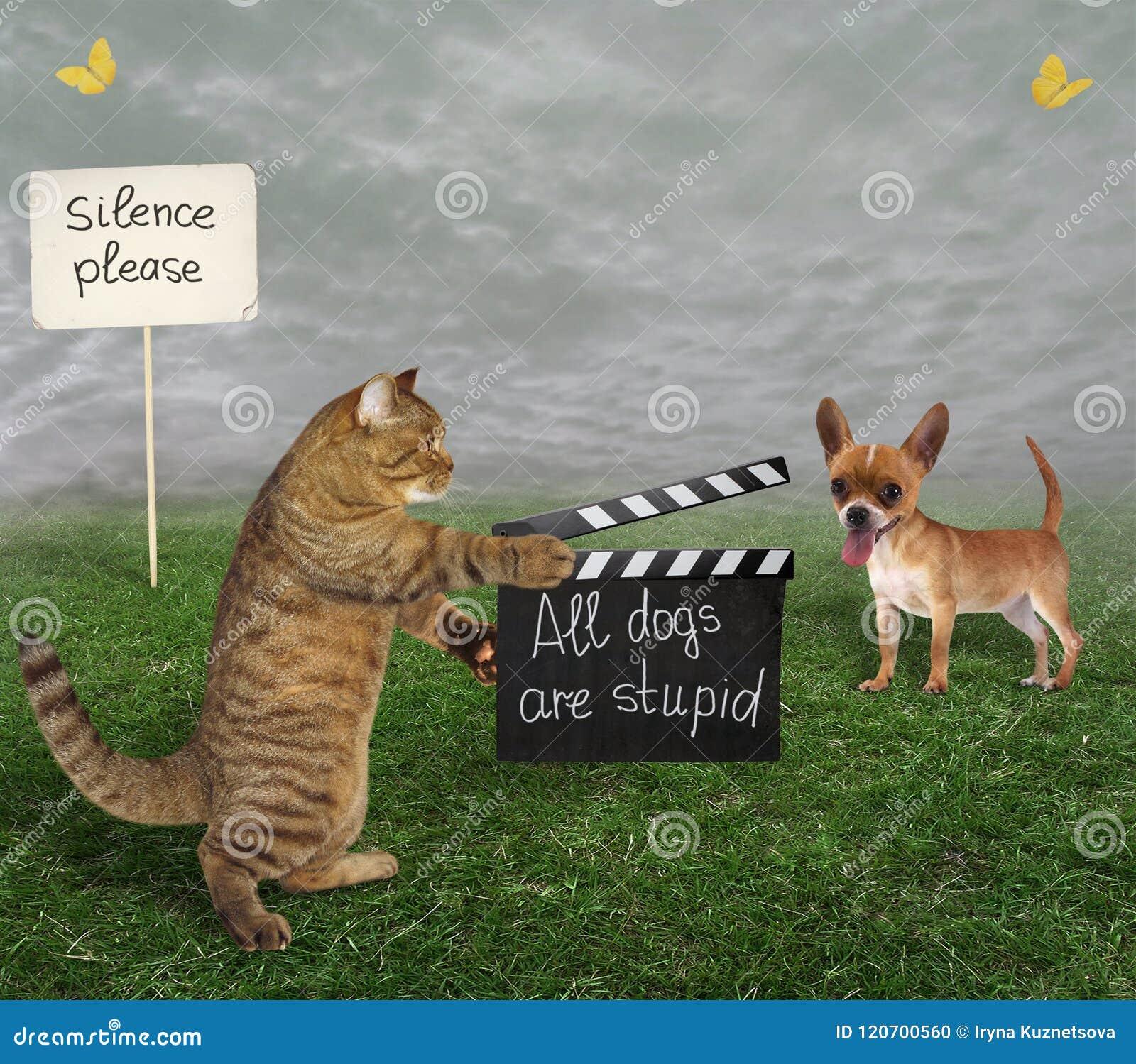 Gato com ripa e cão