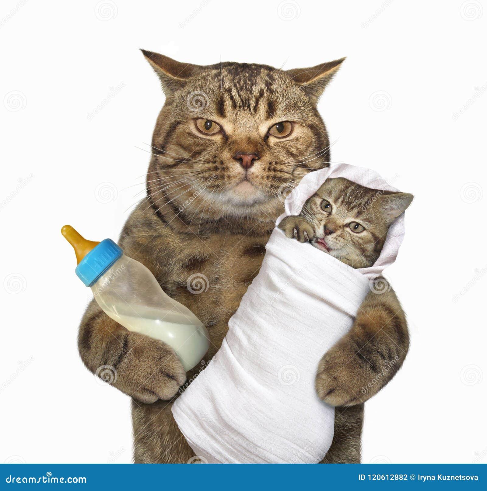 Gato com seu gatinho