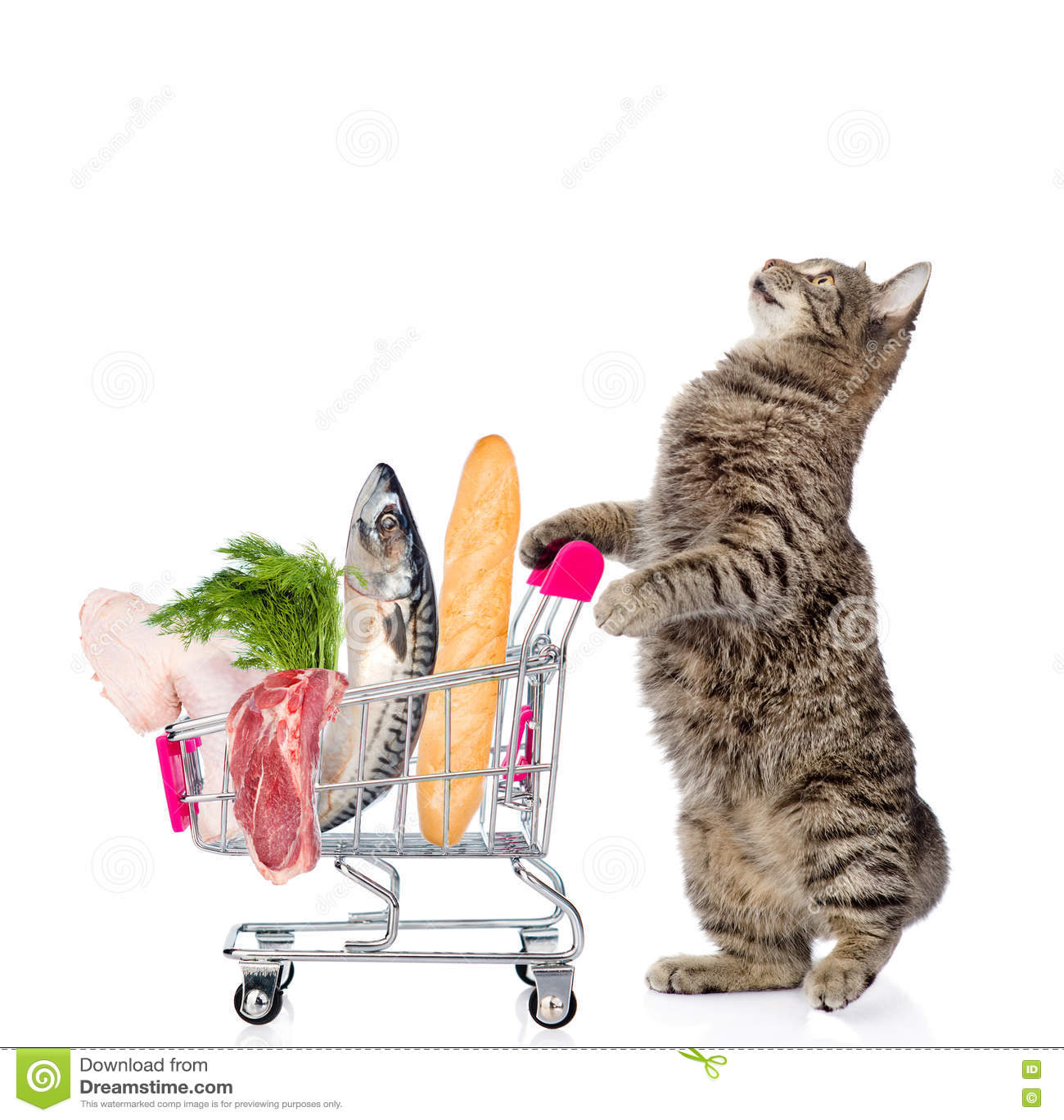 Gato Com Trole Da Compra Completamente Do Alimento No Backgr Branco Imagem  de Stock - Imagem de cesta, carro: 82267397