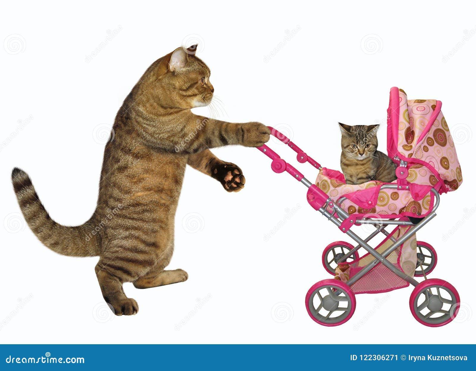 Gato com um carrinho de criança