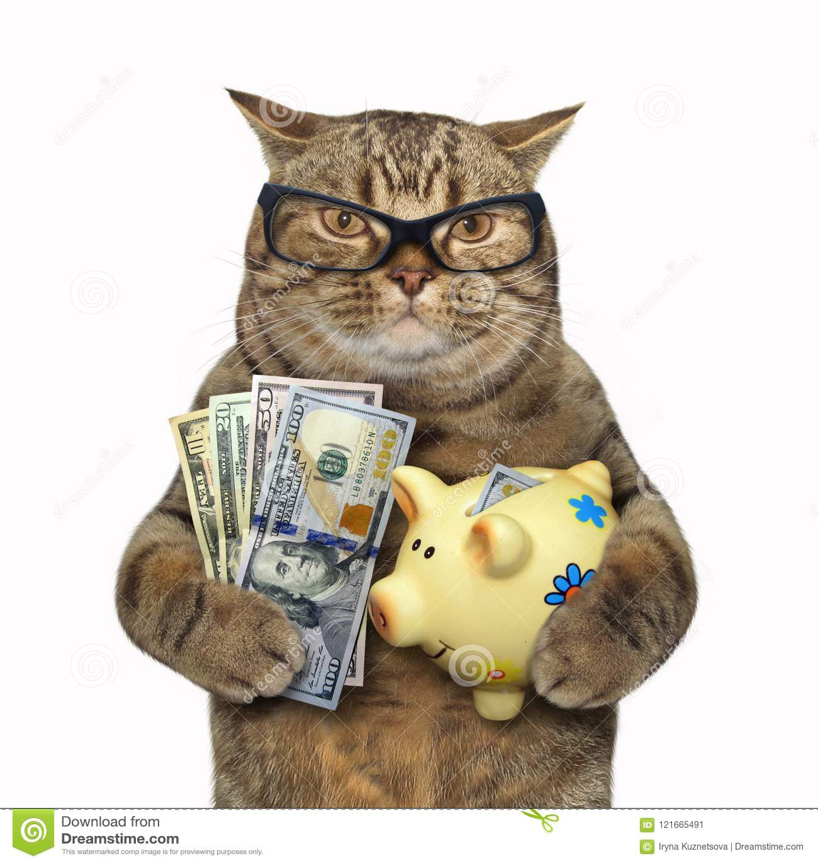 Gato com um mealheiro para dólares